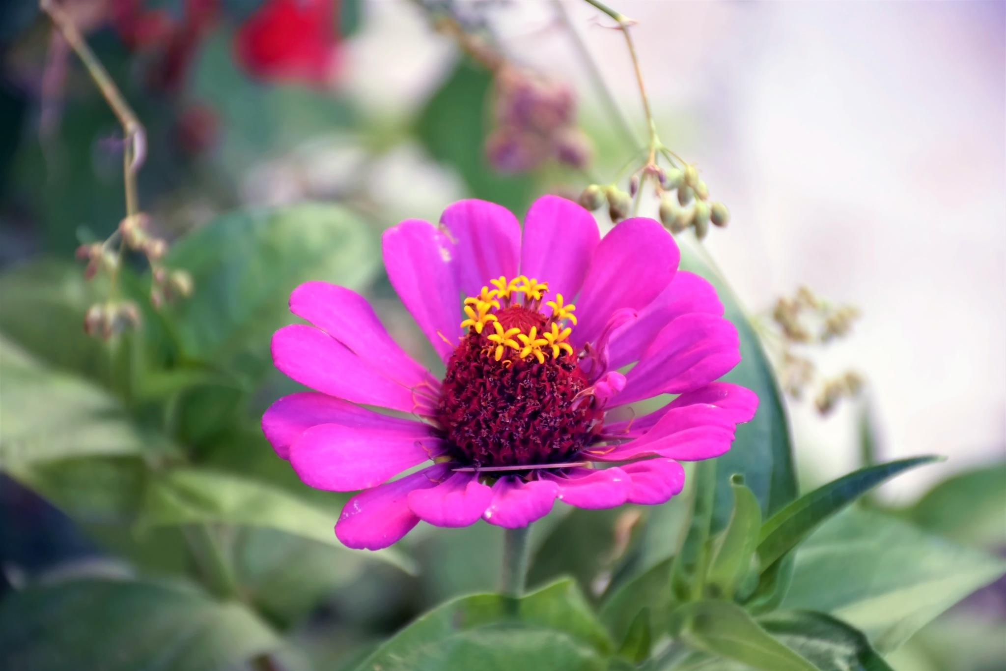 Çiçek içinde çiçek... by Erkan Baysal