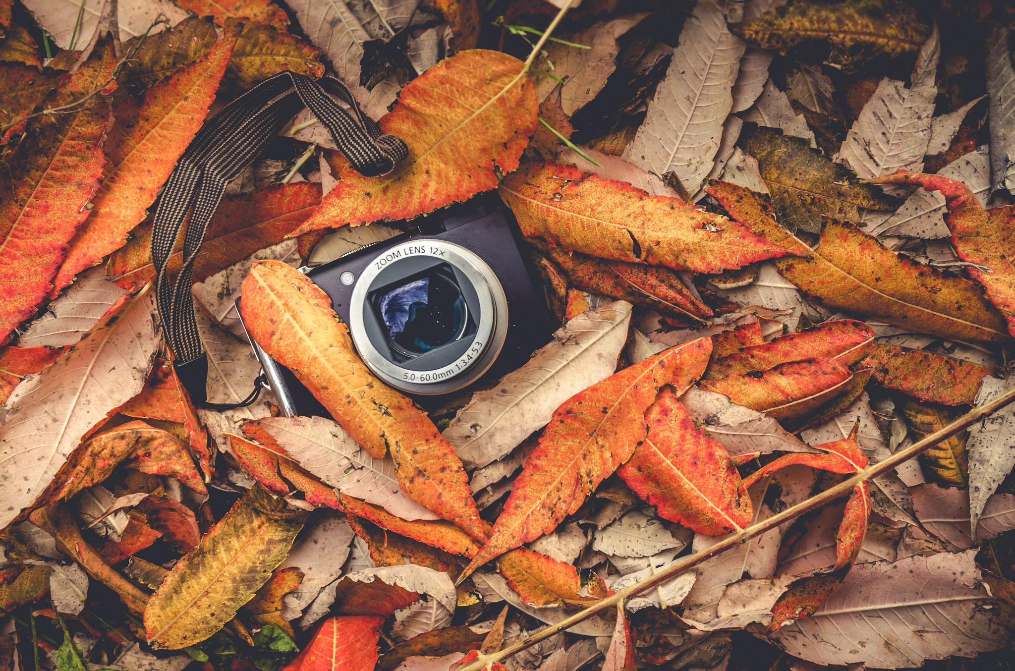 photo cam on leaves by Mirsad Sarajlic