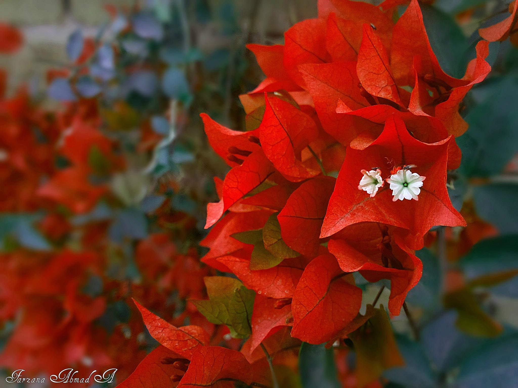 Colour ..... by Farzana Ahmad