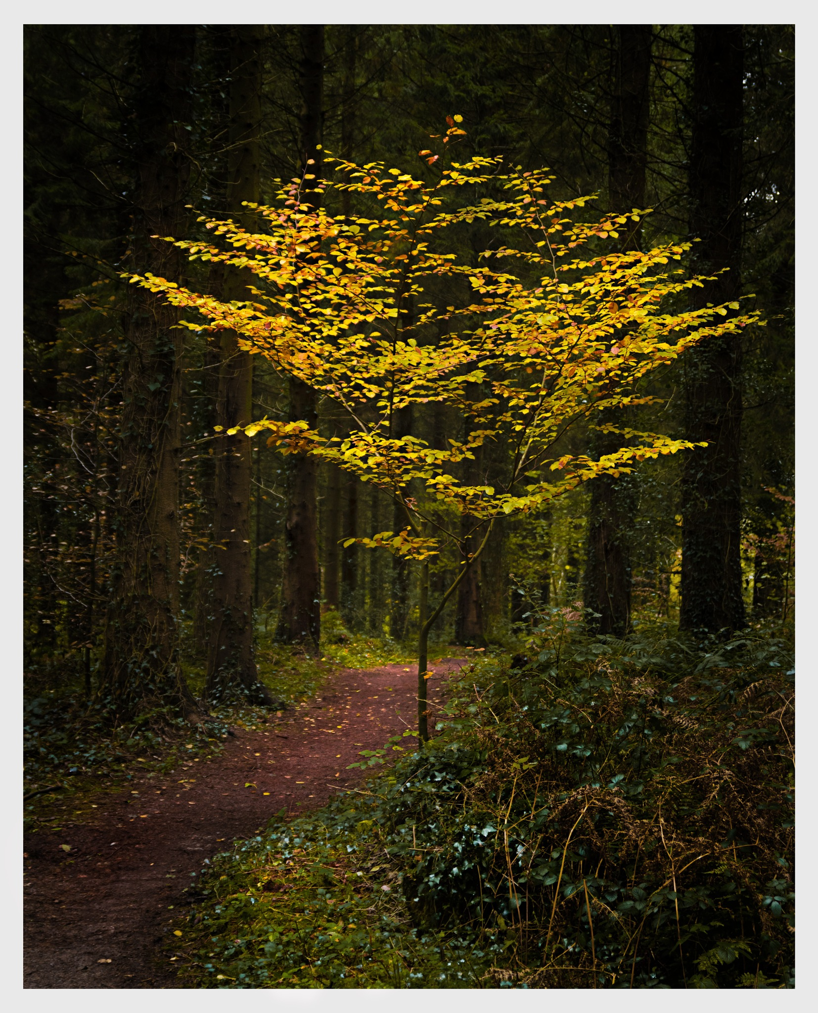 Autumn Tree by Martin Roberts