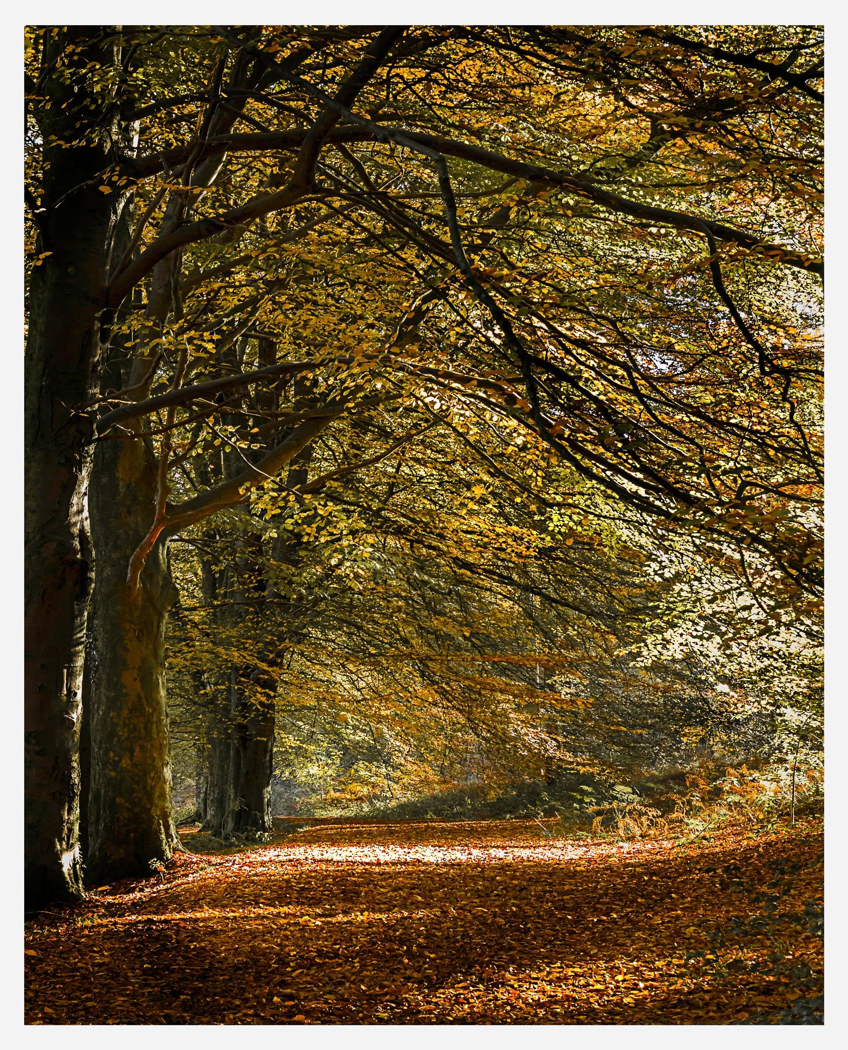 Autumn Path by Martin Roberts