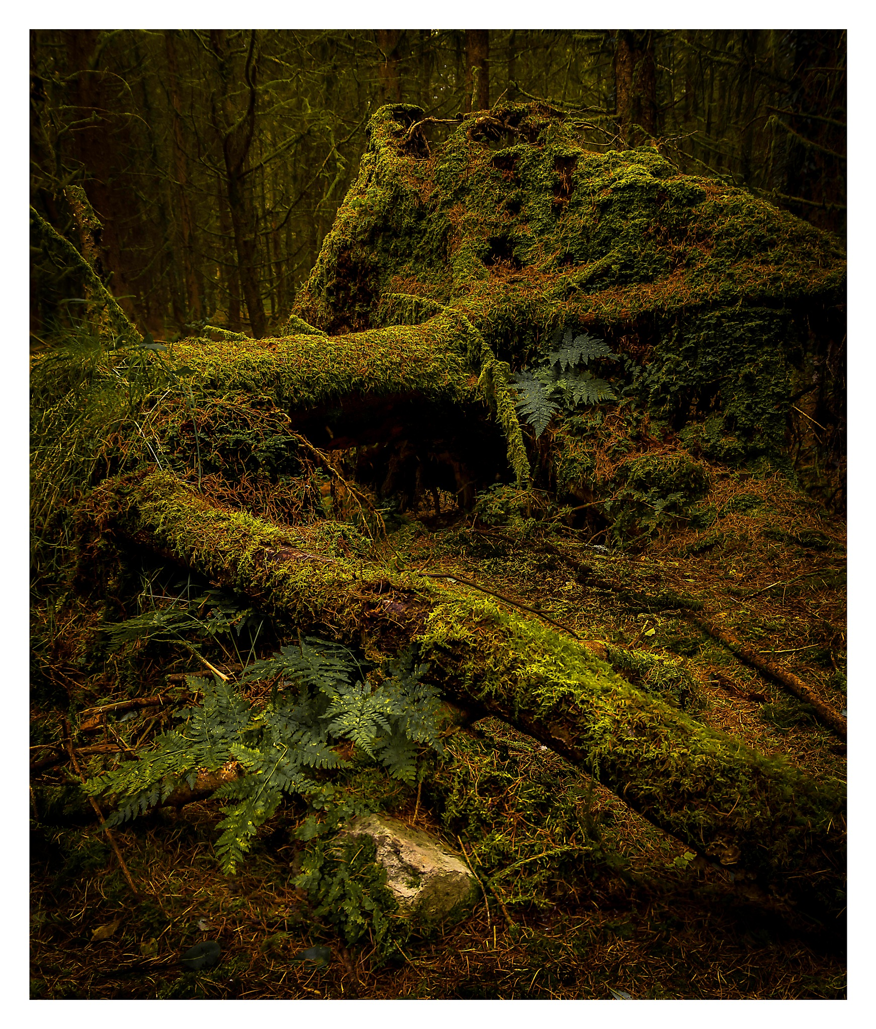 Fallen Trees by Martin Roberts