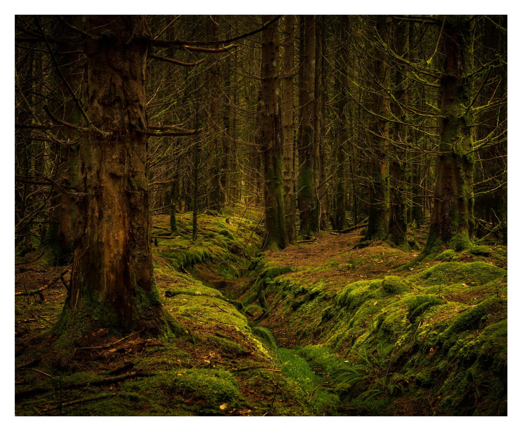 Woodland Brook by Martin Roberts