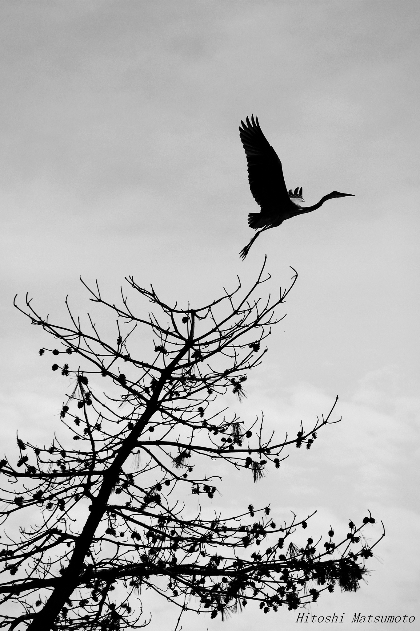 Fly away by Hitoshi Matsumoto