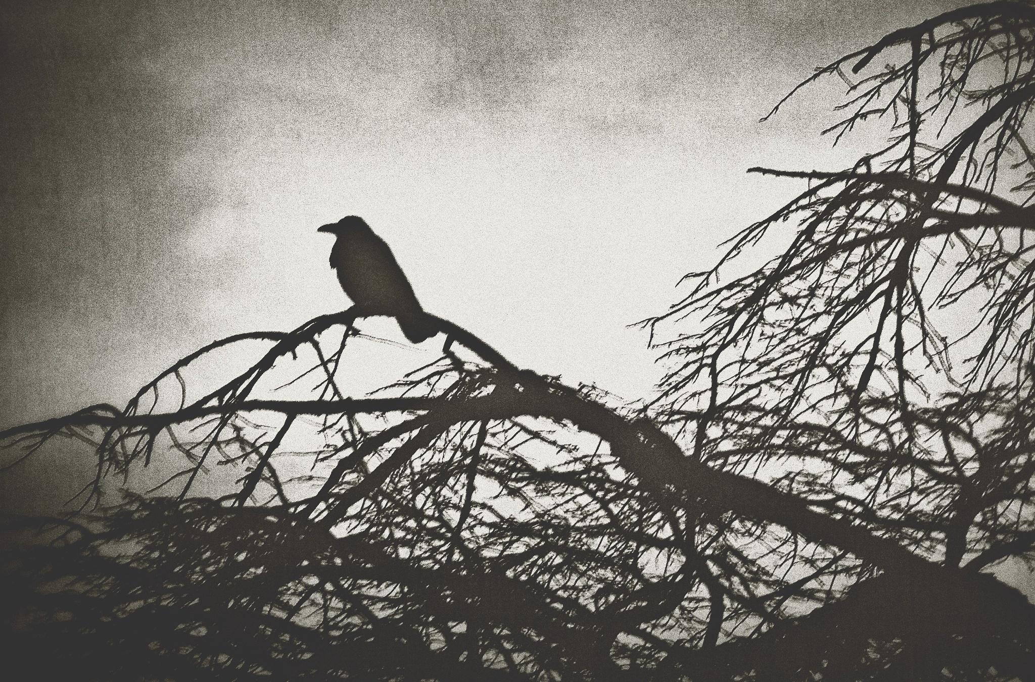 Crow by Hitoshi Matsumoto