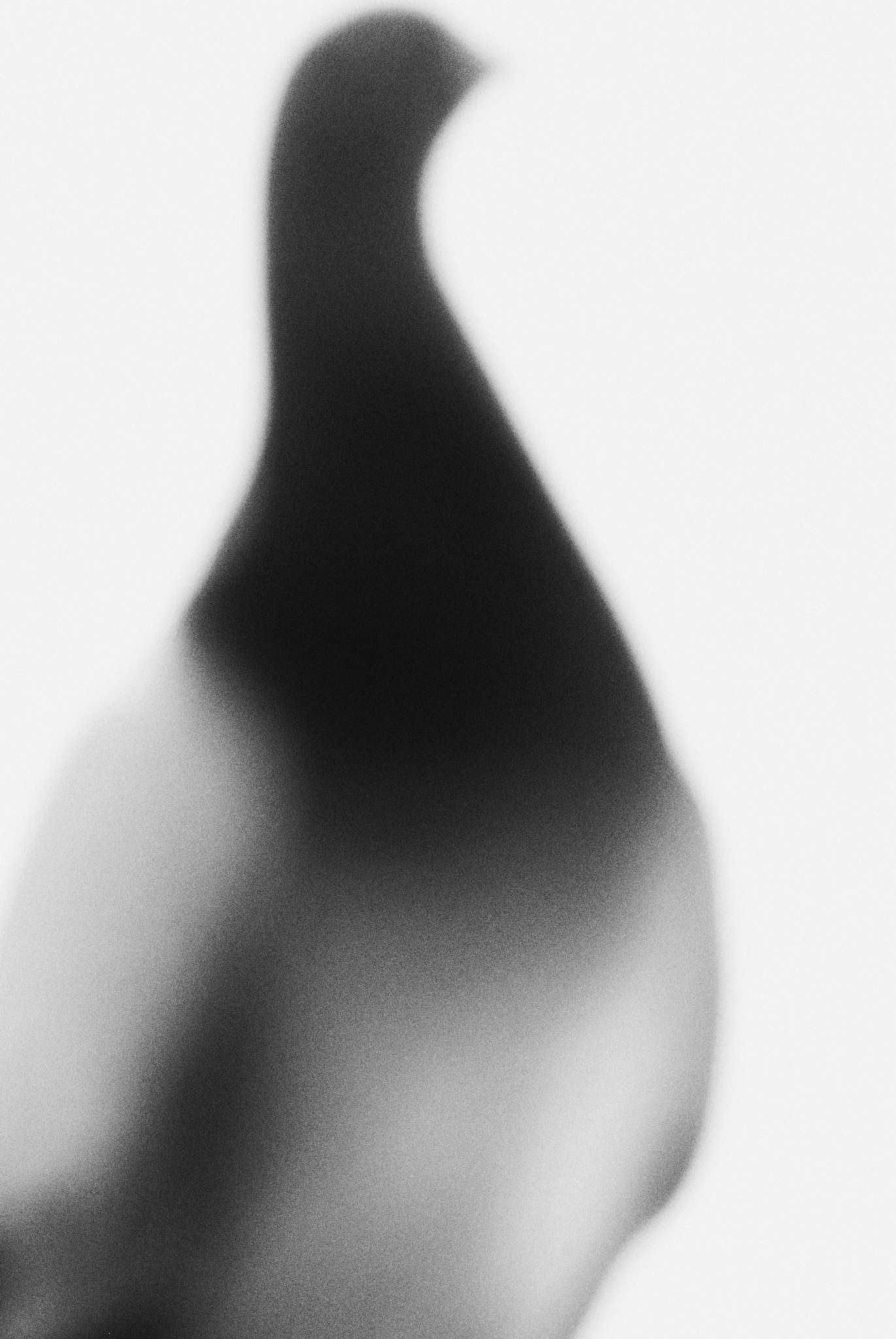 Photo in Black and White #monochrome #black and white #bird #dove #abstract #japan #osaka