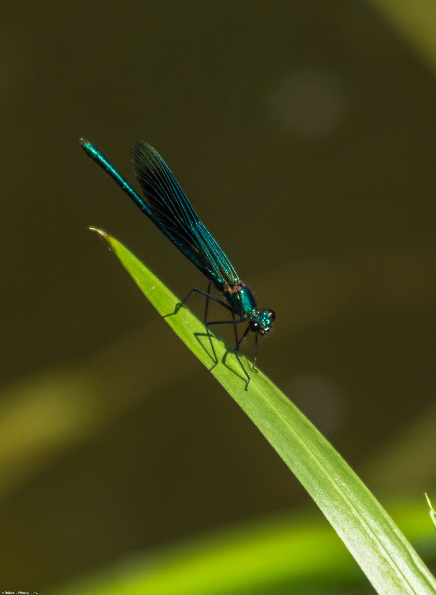 Photo in Nature #nature #wildlife #insects #colour #wings