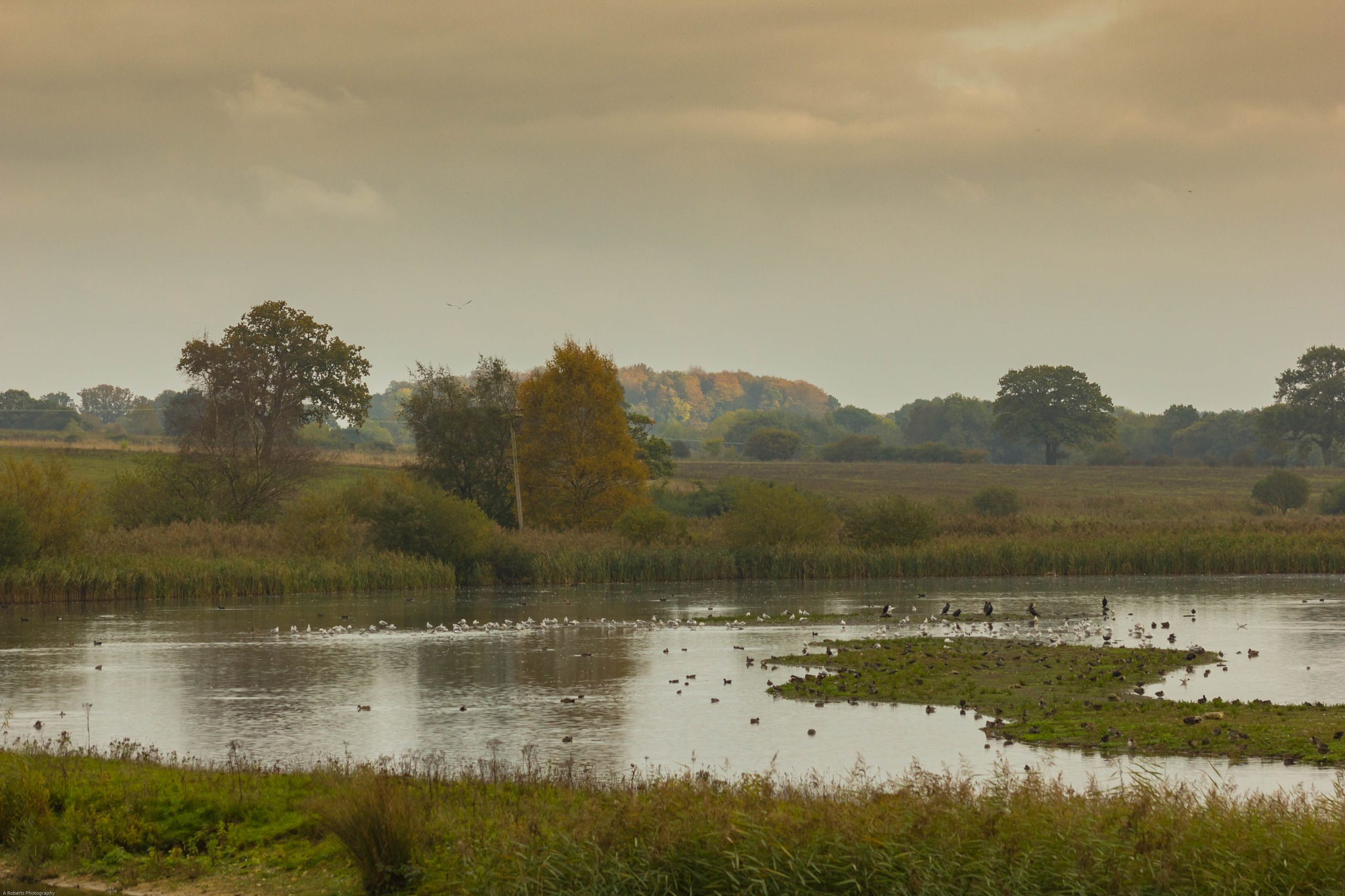 Pensthorpe Natural Park by Andy Roberts