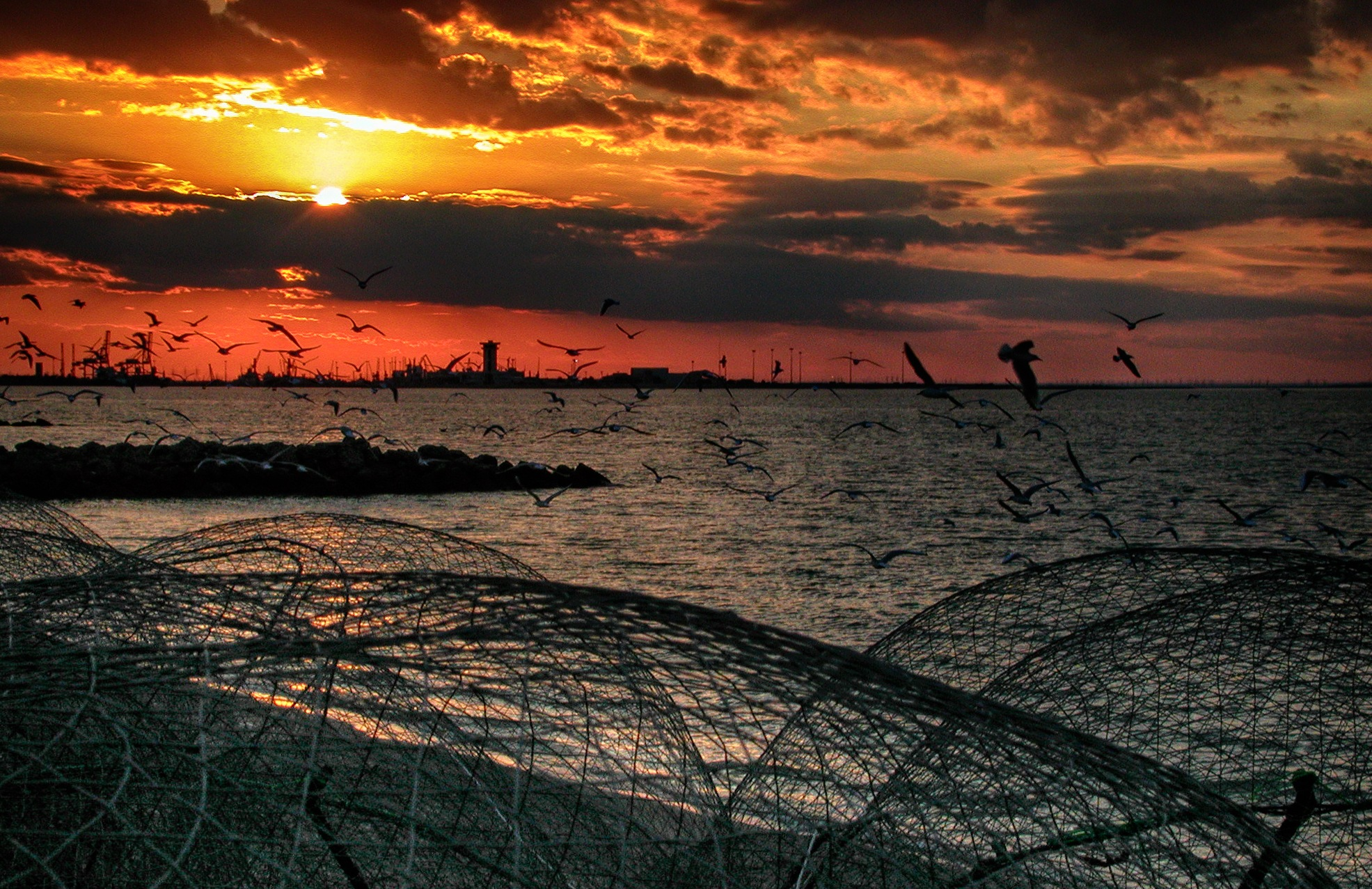 Seagulls at sunset by Hisham Badran