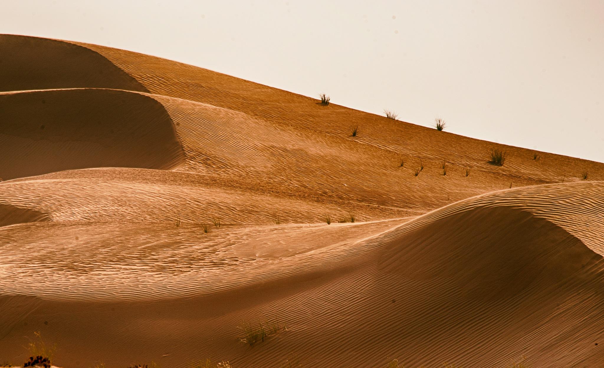 Dunes of sunset II (full screen) by Hisham Badran