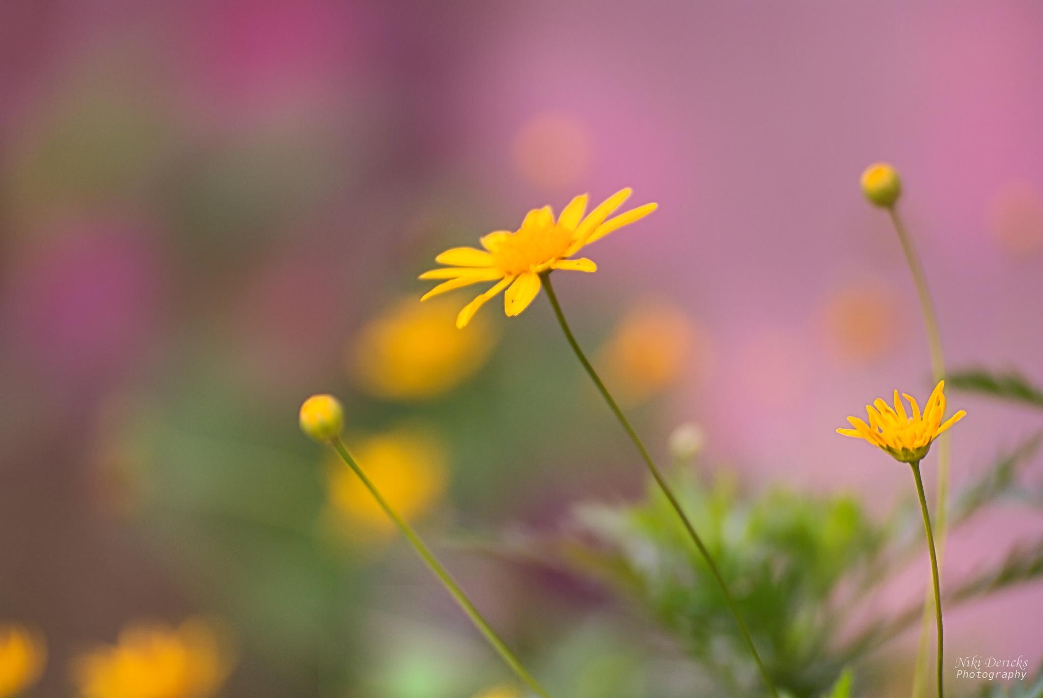 Yellow flower by Niki Dericks