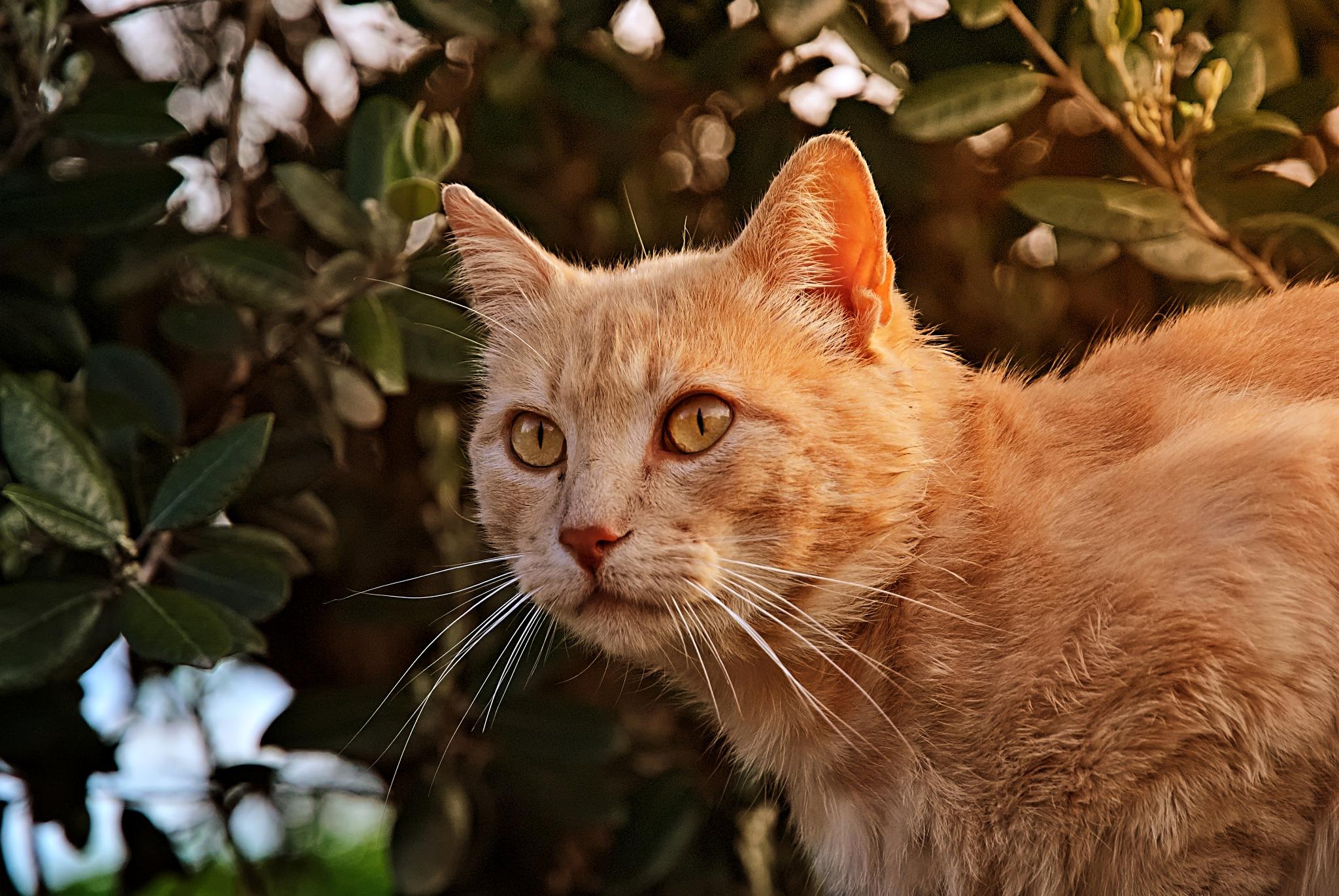 Cat portrait by Niki Dericks