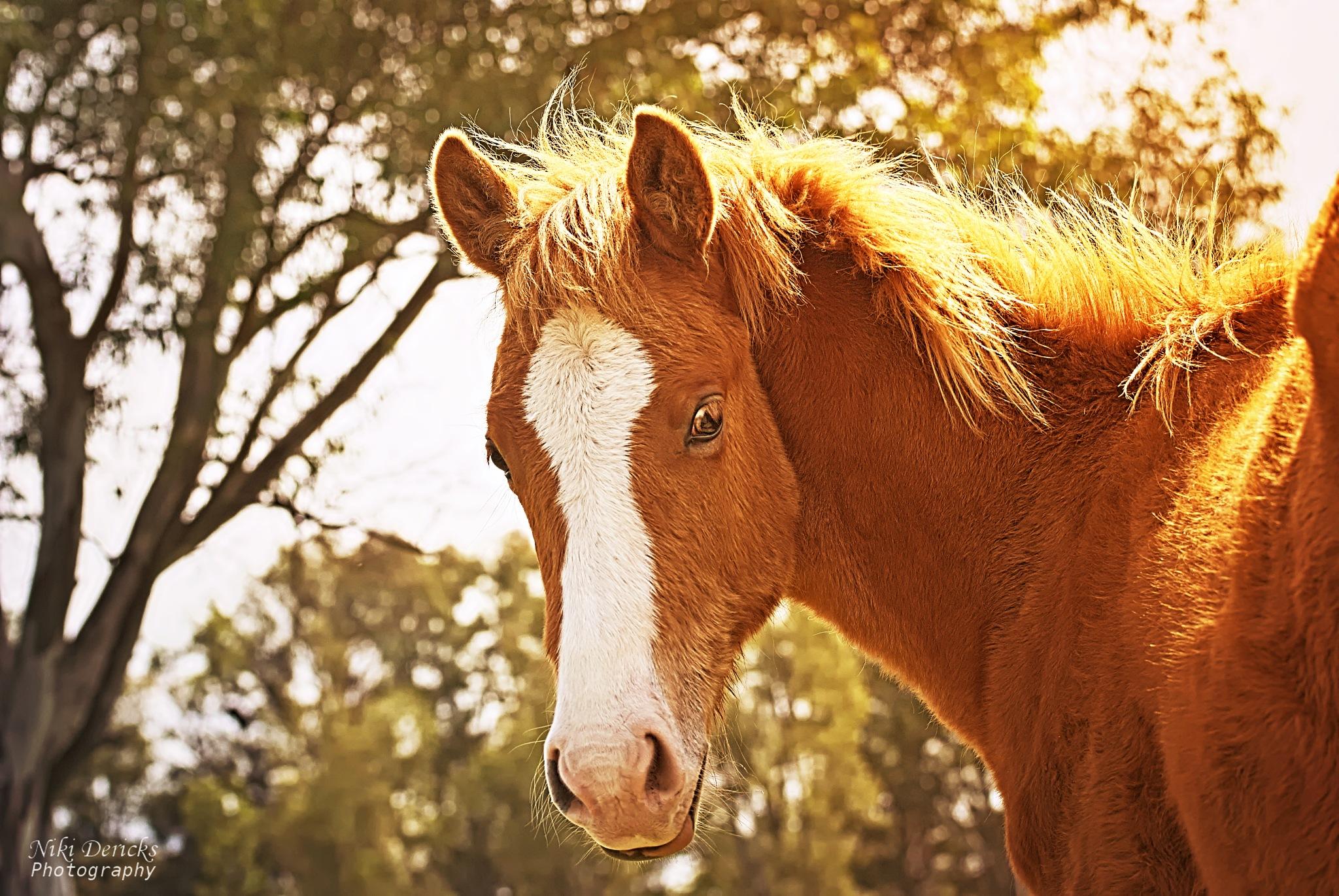 Foal by Niki Dericks
