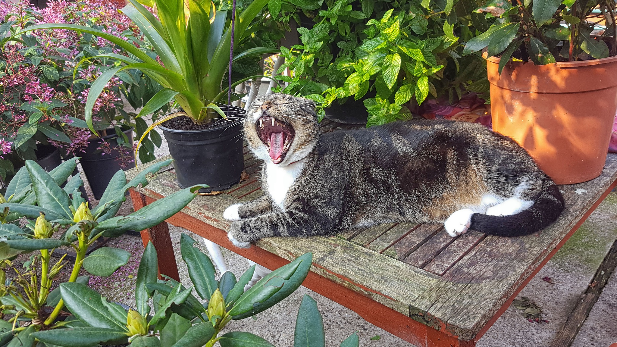 Photo in Animal #cat #tom cat #sleep #garden #sunshine