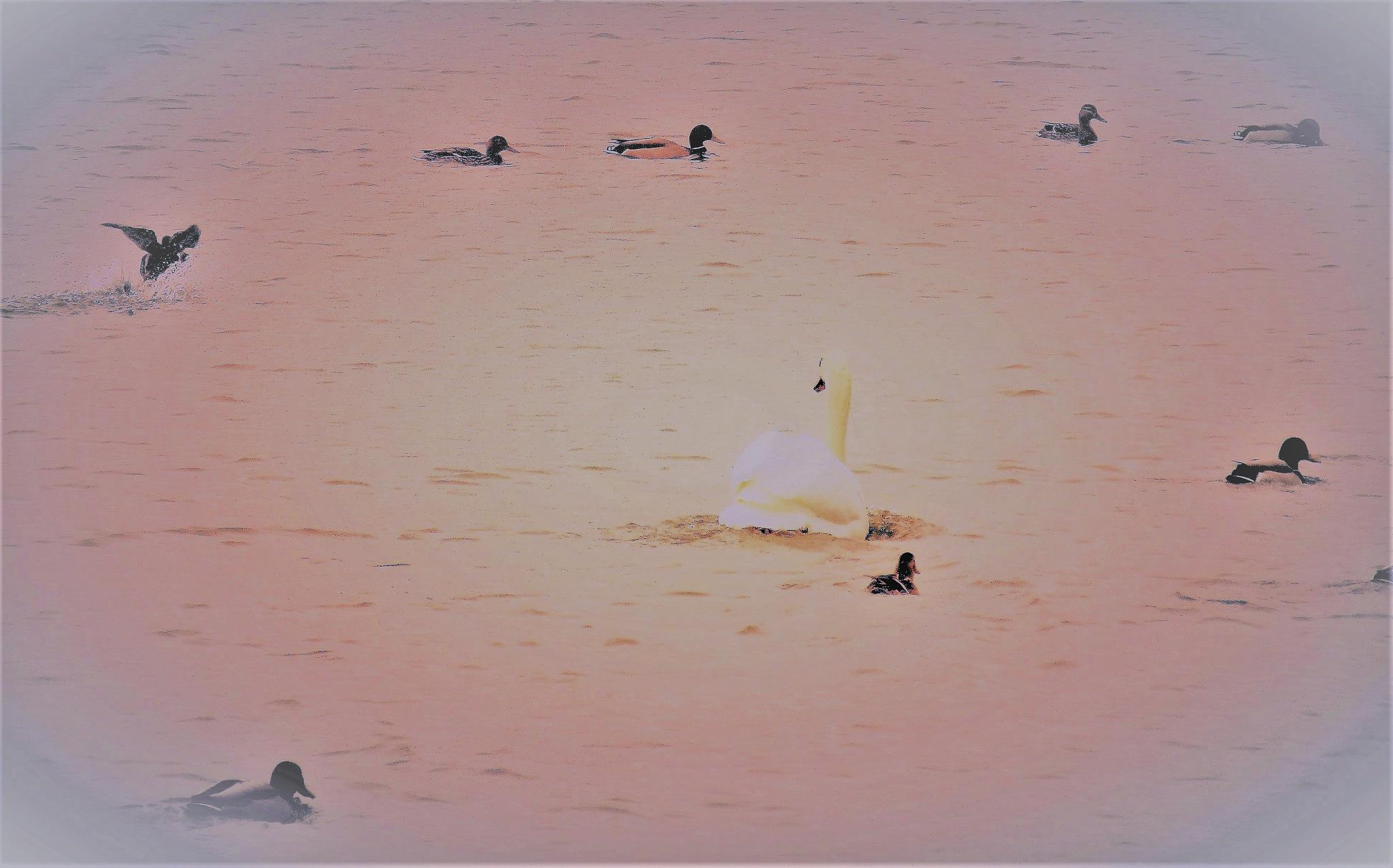 la coure by vigilicatherine