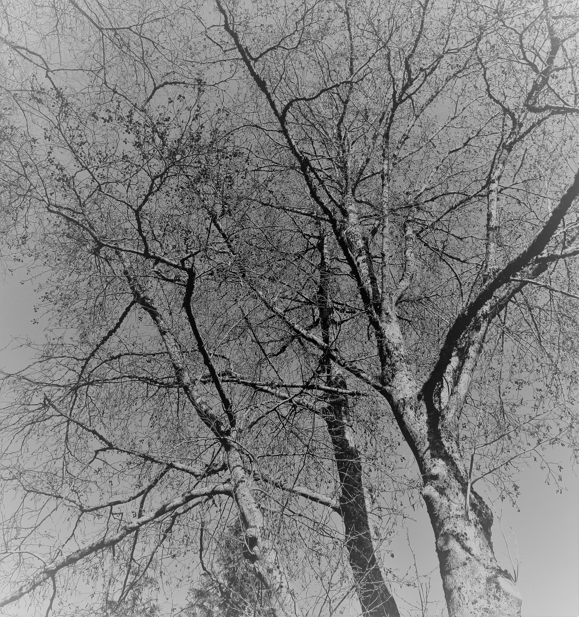 Branches by vigilicatherine