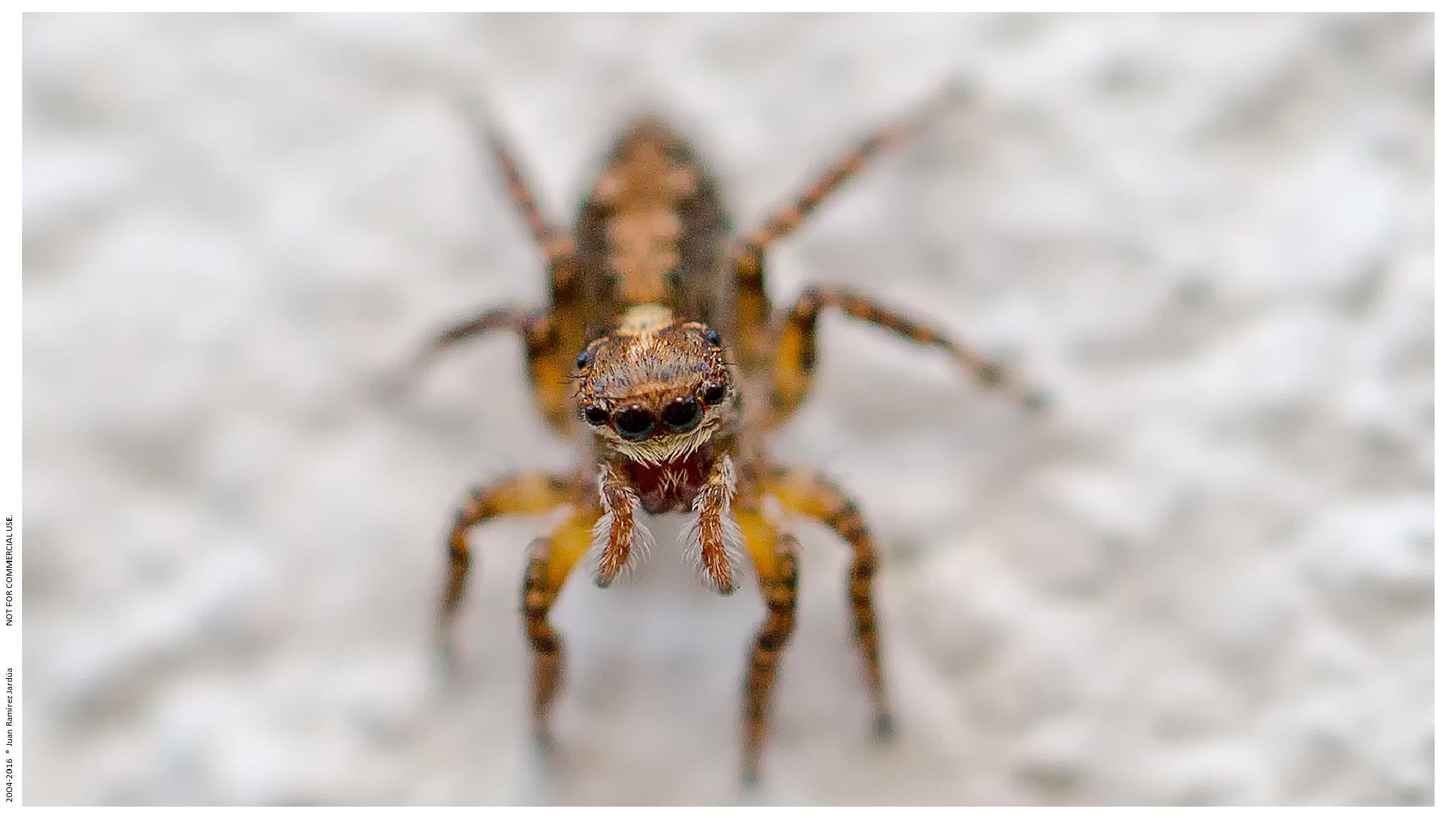 Spider in my garden by juanramirezj