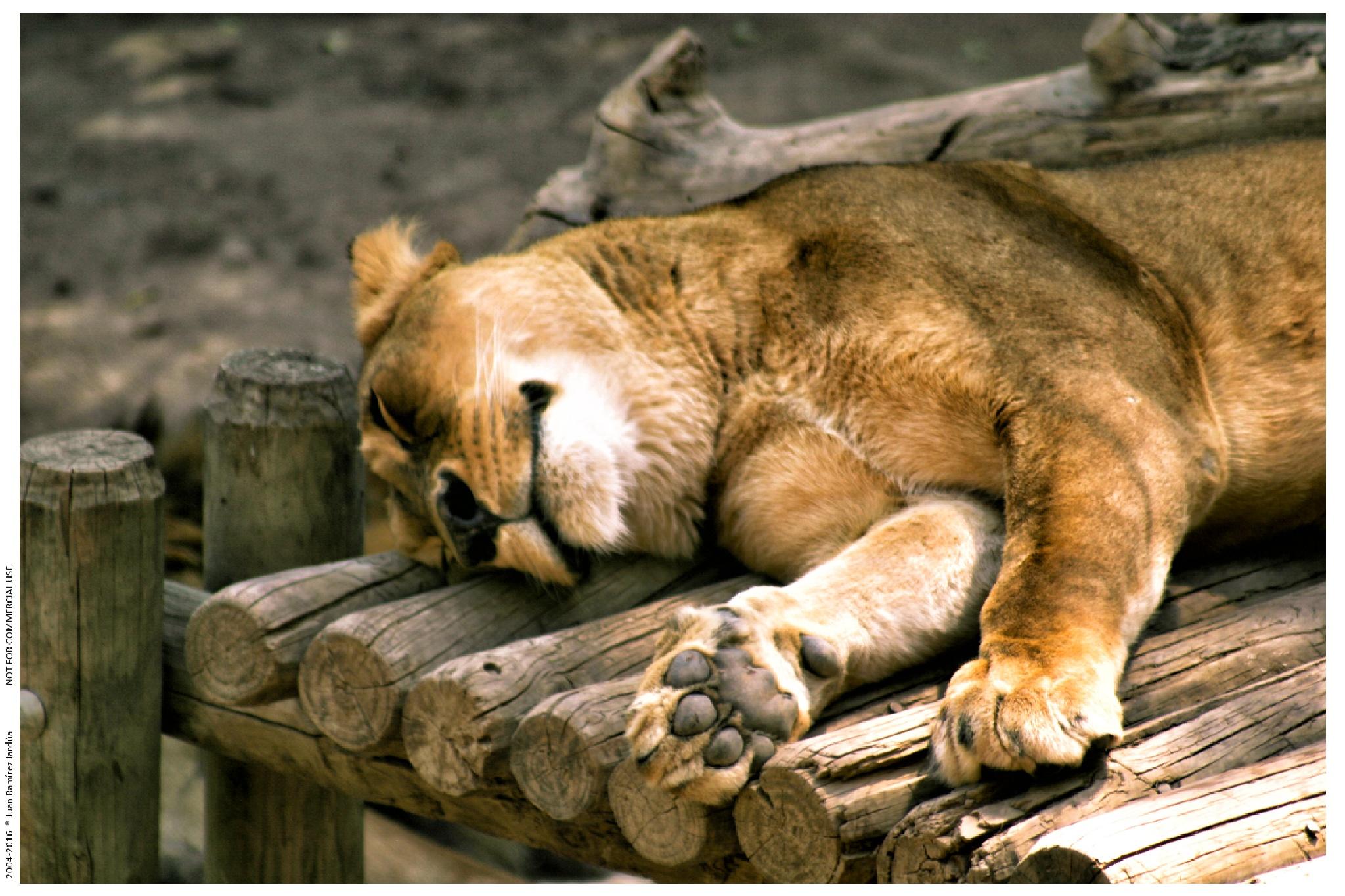 Sleep time by juanramirezj