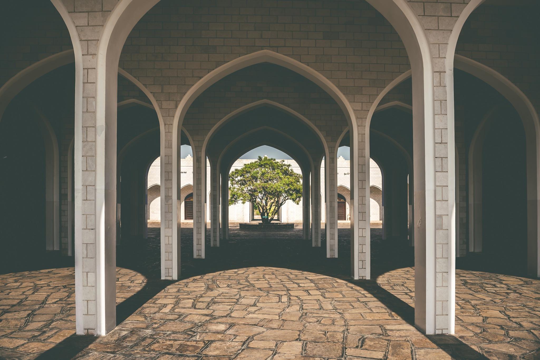 Frankincense tree [Sultanate of Oman] by David Sury