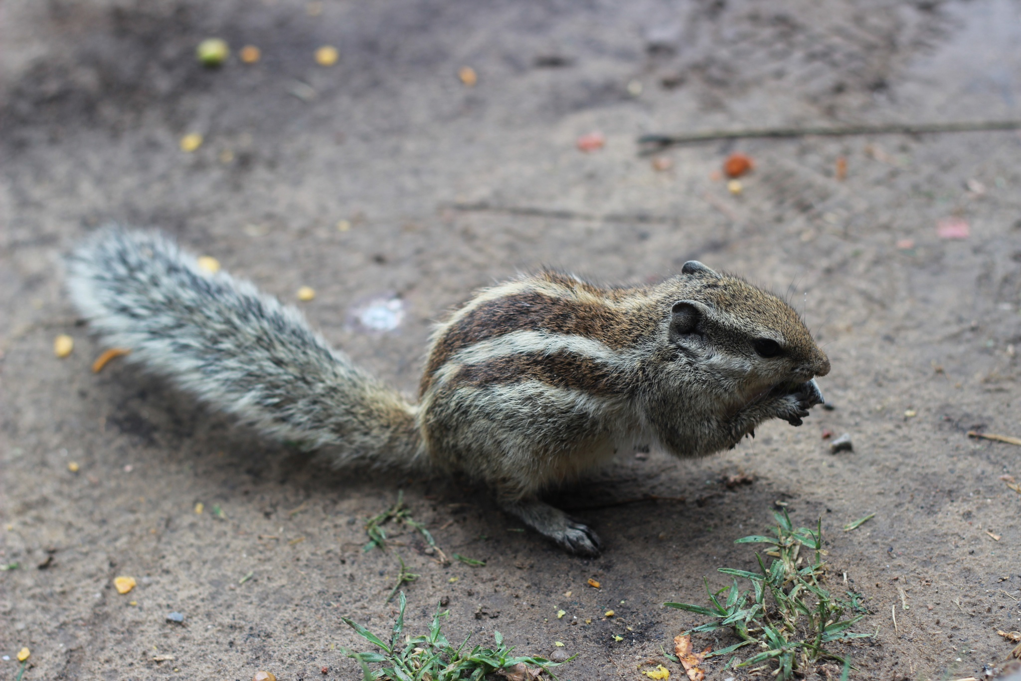 The Squirrel by Rabnoor Singh