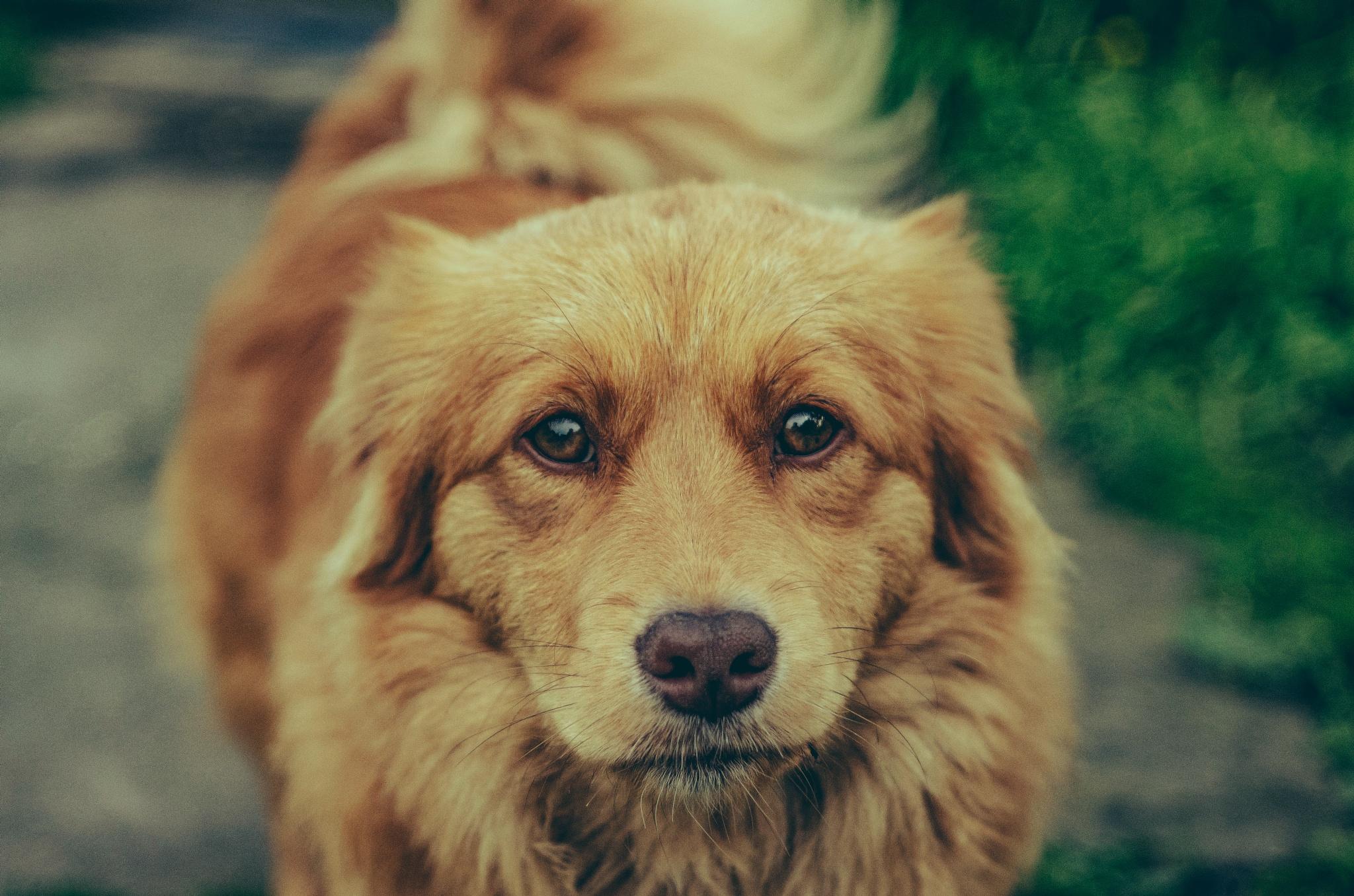 Photo in Animal #dog #bestfriend