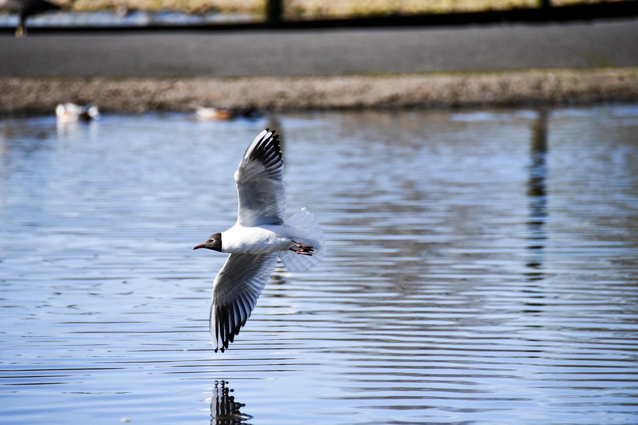 Swoosh by Chris Williams