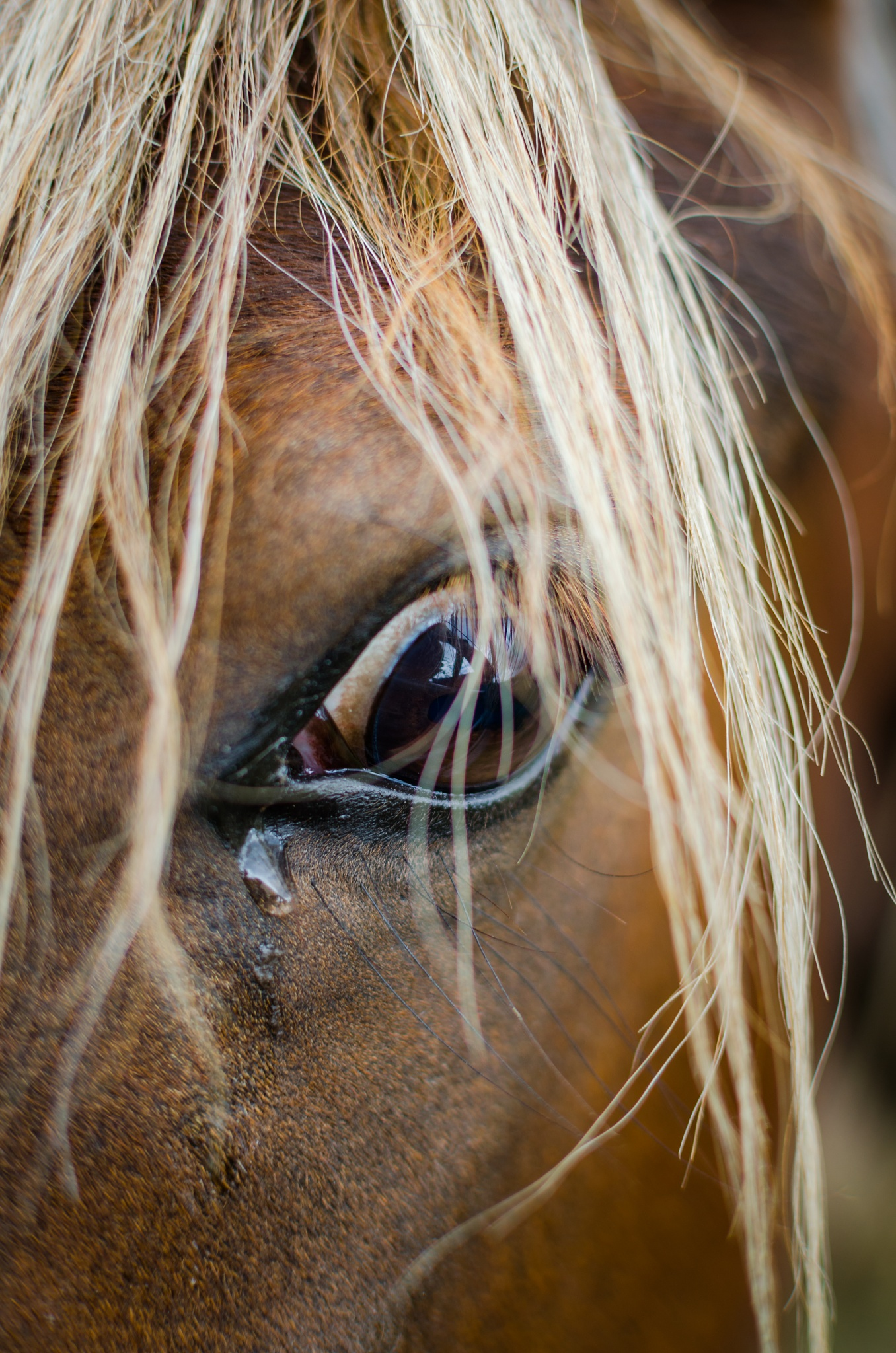 crying horse by Simon Flint