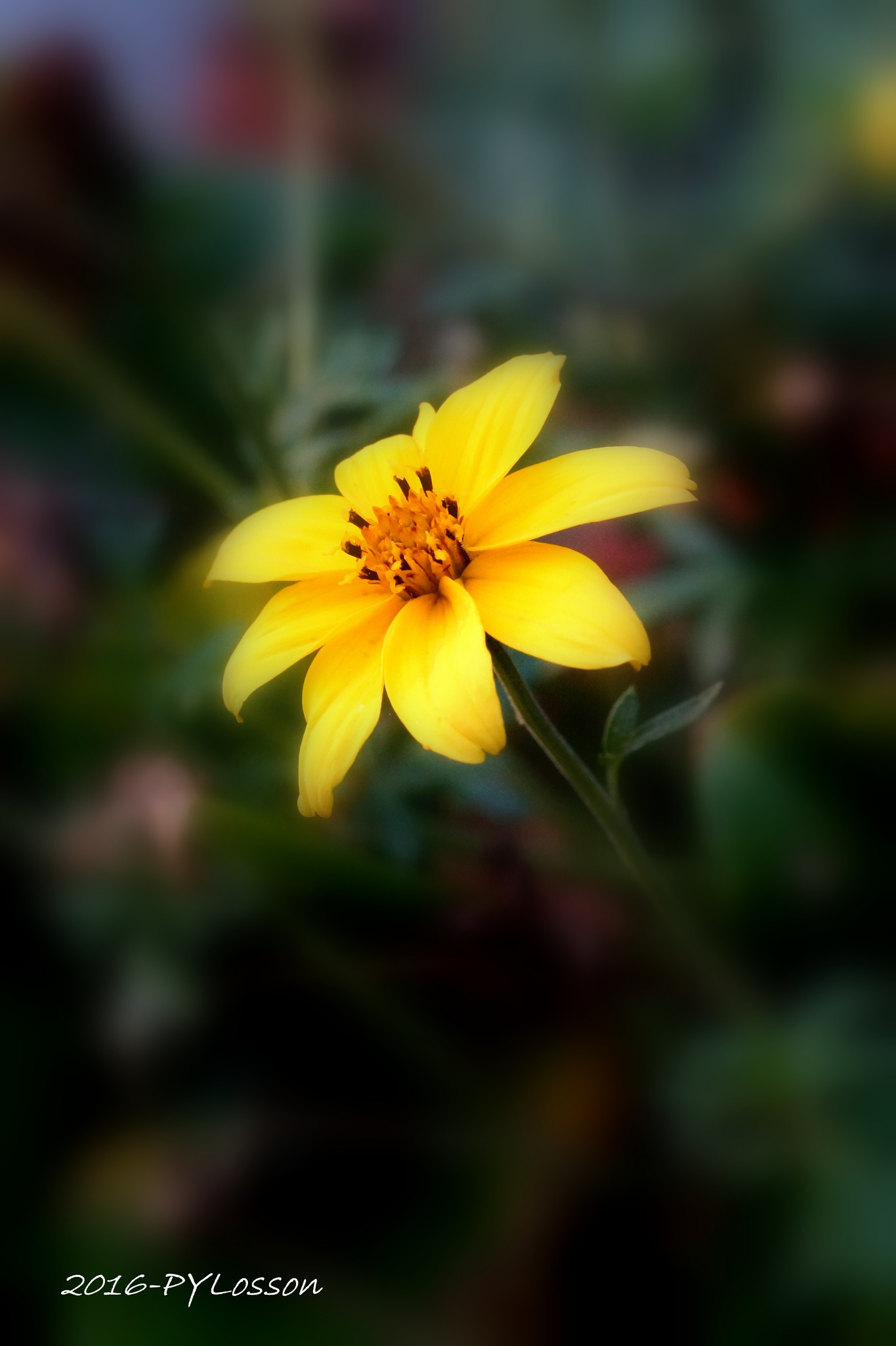 flower by Pierre-Yves Losson