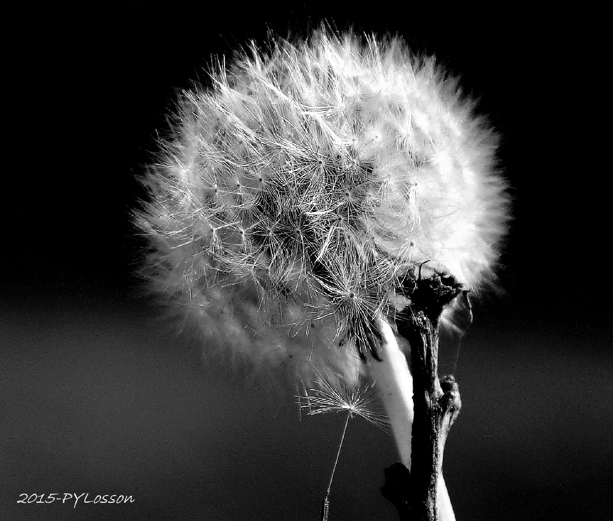 who wants to blow ??? by Pierre-Yves Losson