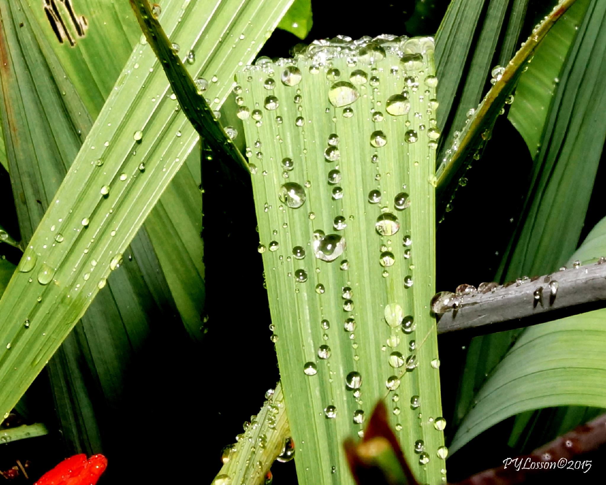 Photo in Nature #droplets-nature-macro