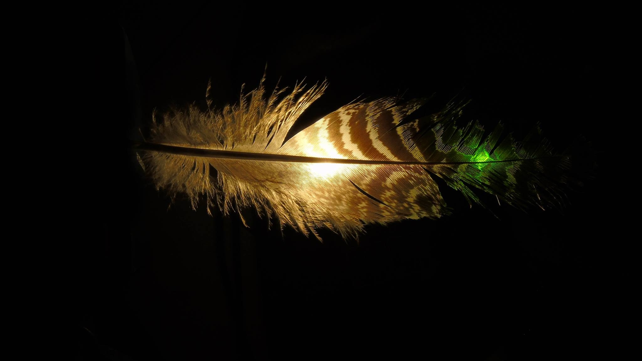 Feather - 1 by Photofountain