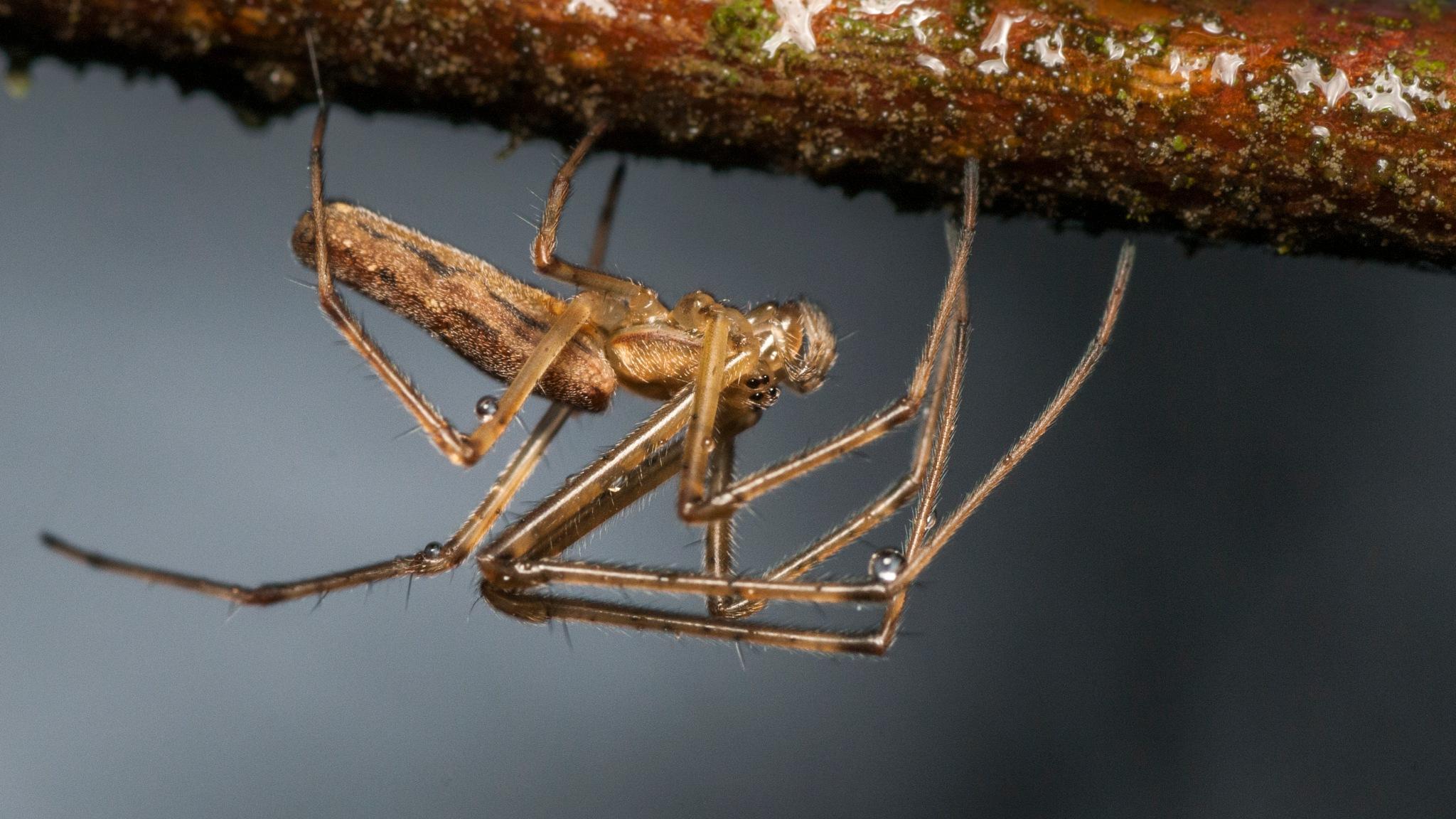 Spider by Karstenbp