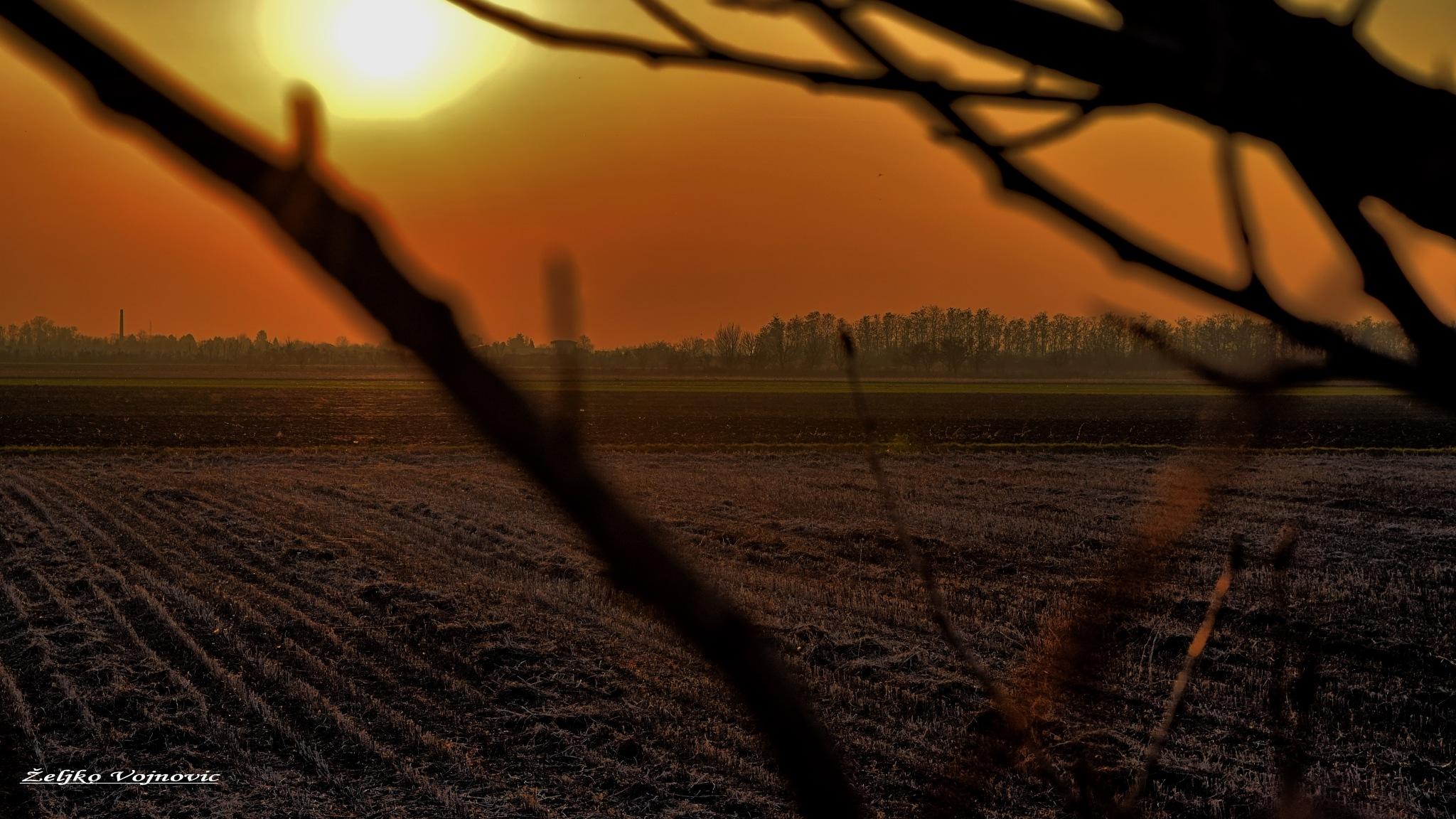 Sunset in the field  by Željko Vojnović