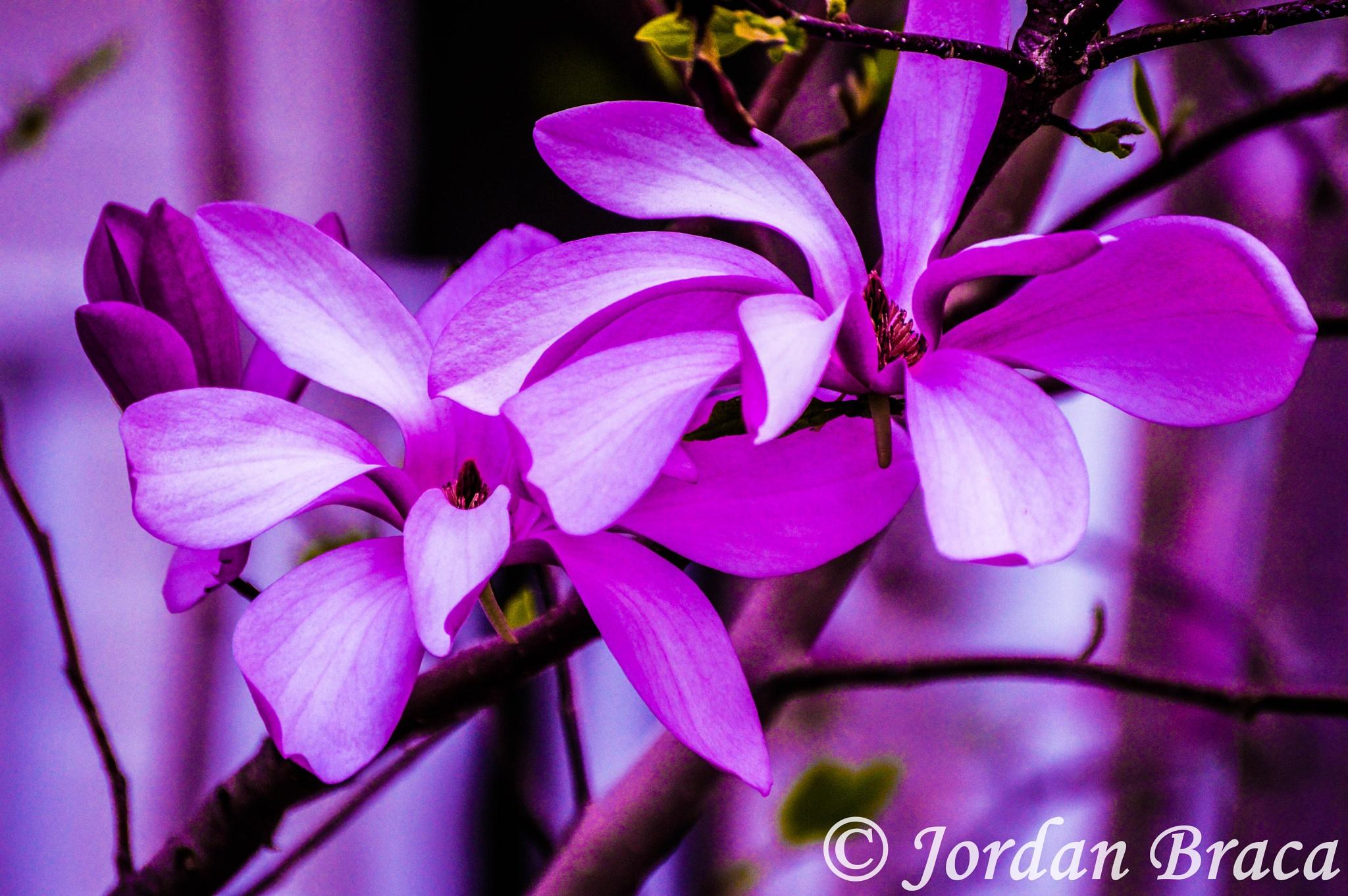 Flowers by Jordan Anne