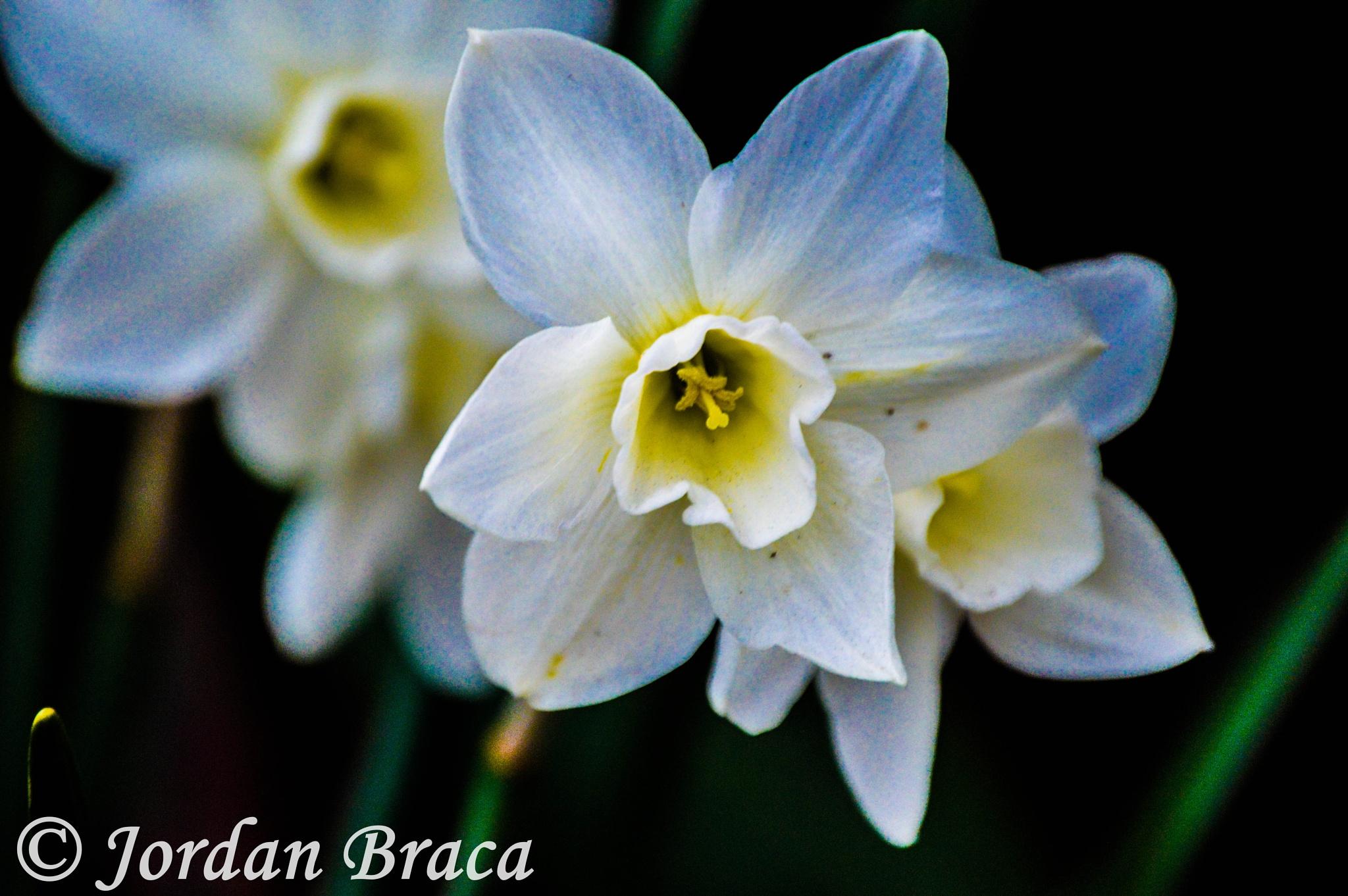 Spring by Jordan Anne