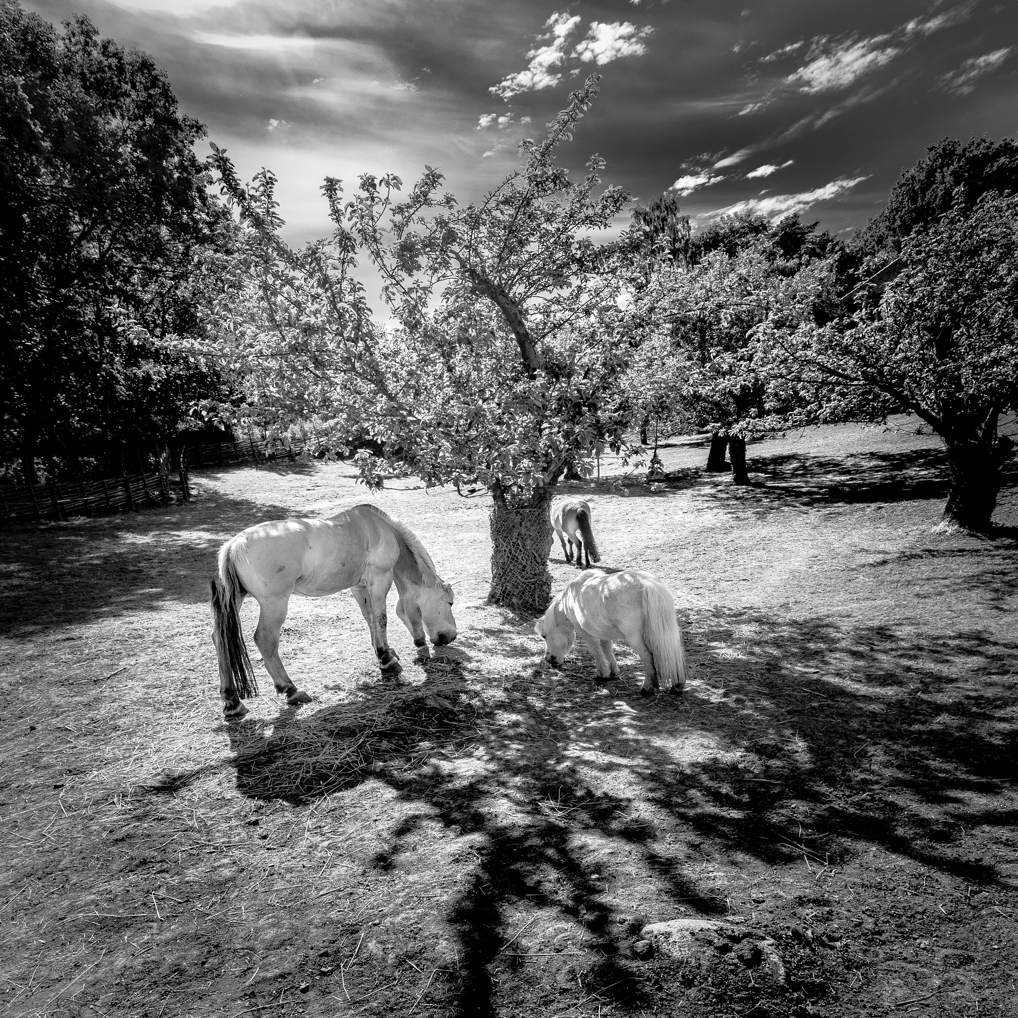Apple Tree. Horses by Anders Green