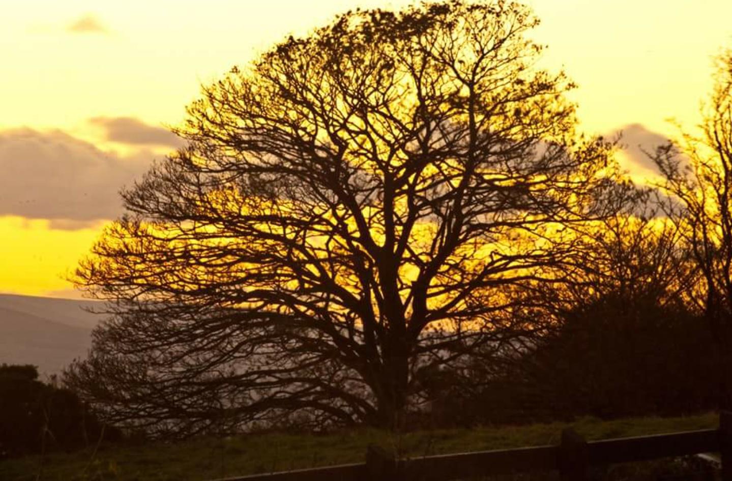 Sunset in Somerset  by Steve Billett