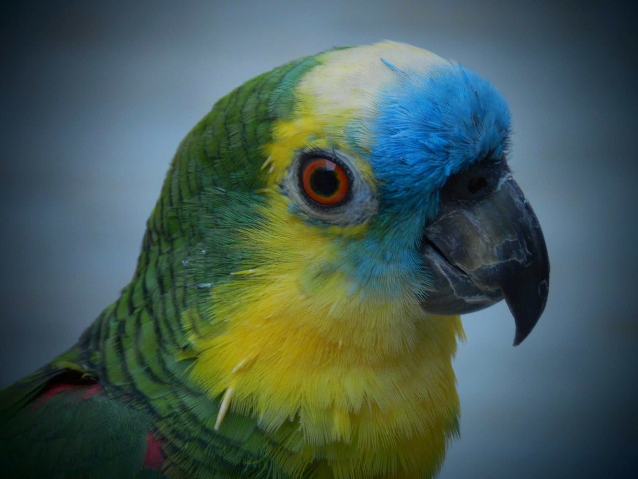 Papagaio  by Maria Pia