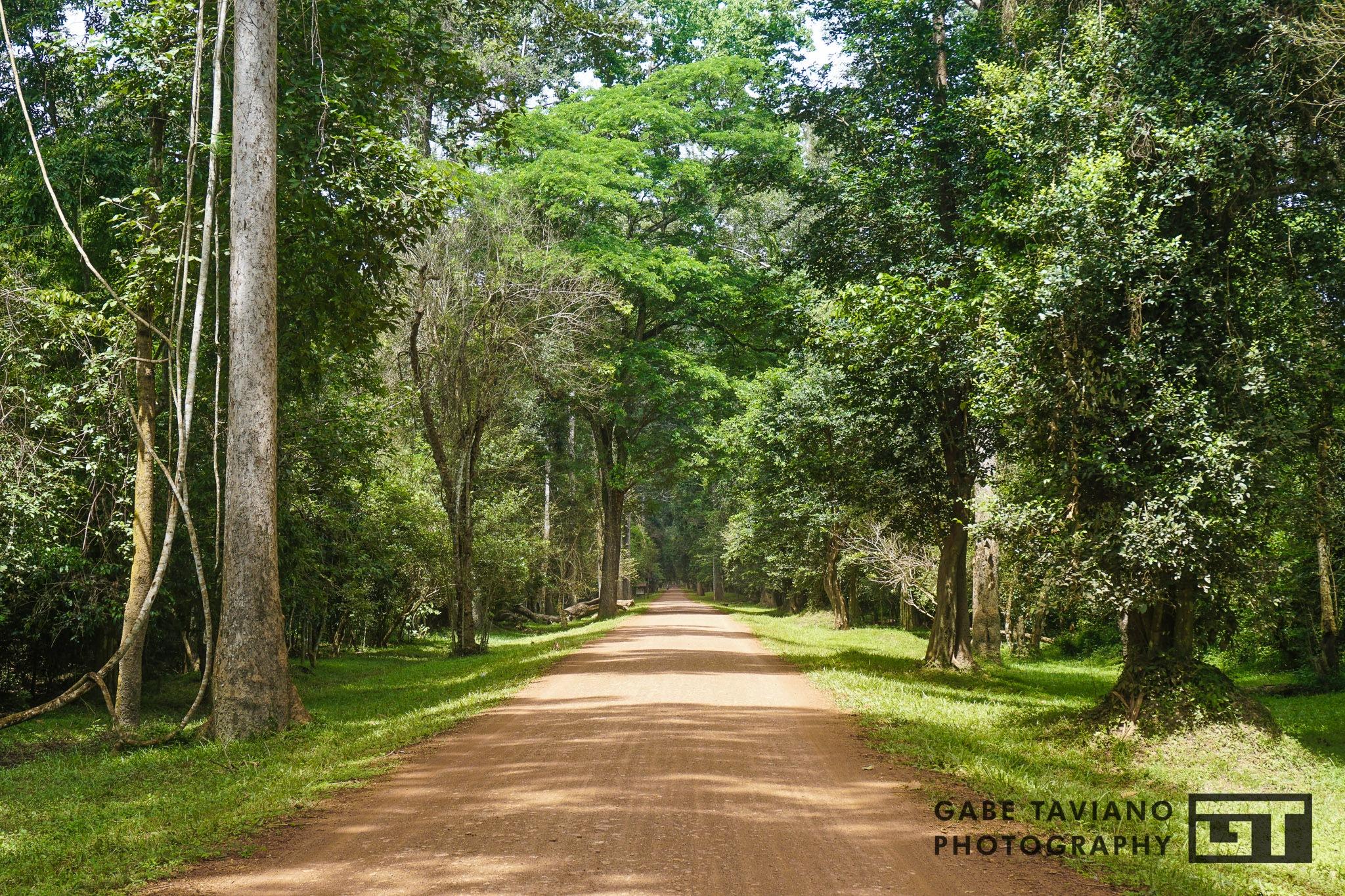 Long road ahead by Gabe Taviano