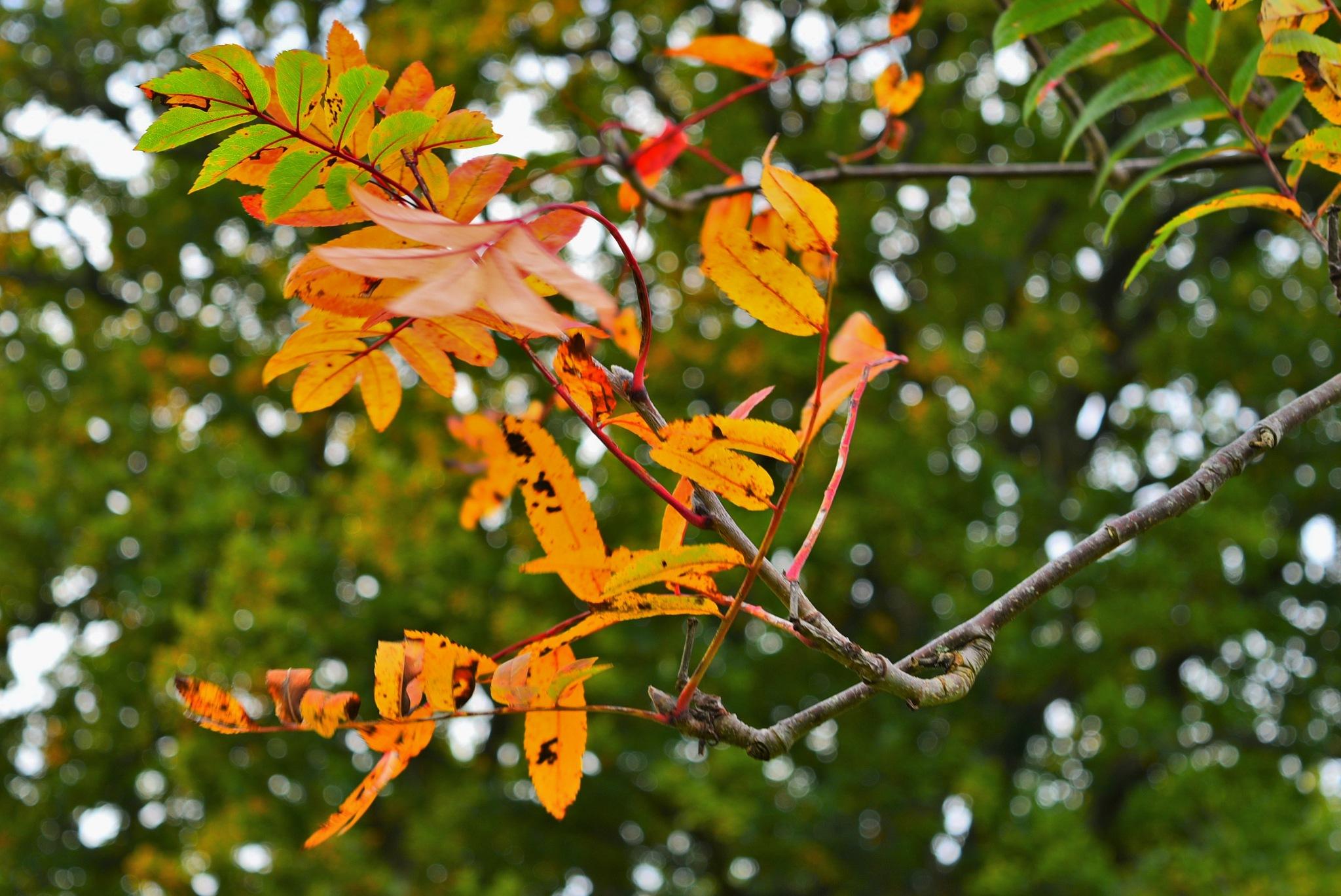 Autumn red by Carmel Oakton