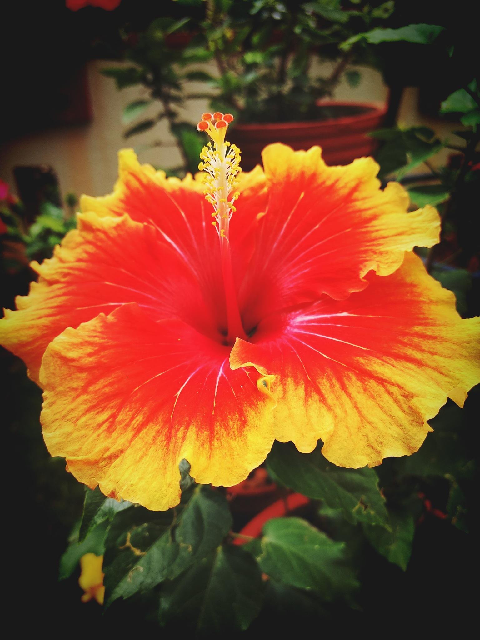 morning Bloom  by zen123456