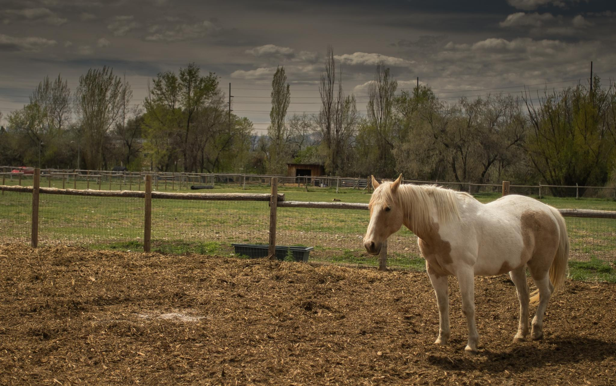 Horse by generoyzengurt
