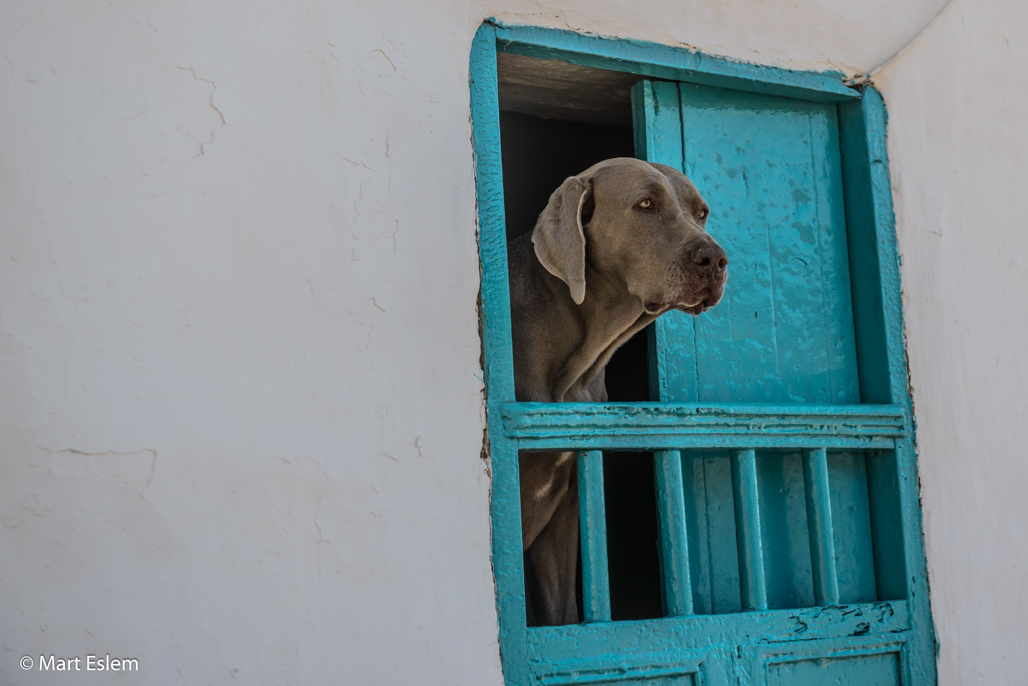 Dog in the window by Mart Eslem
