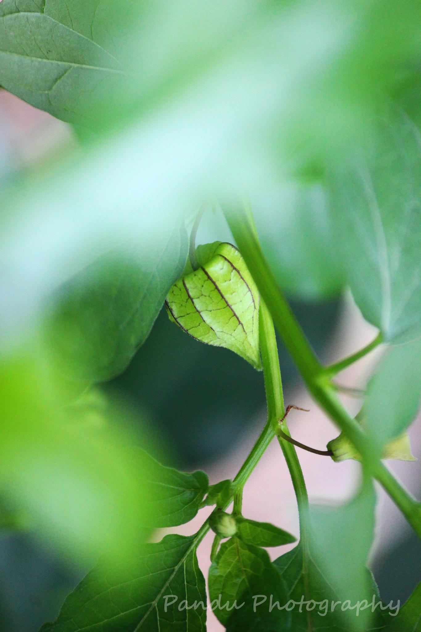 greenary by Naveenkumar Pandu