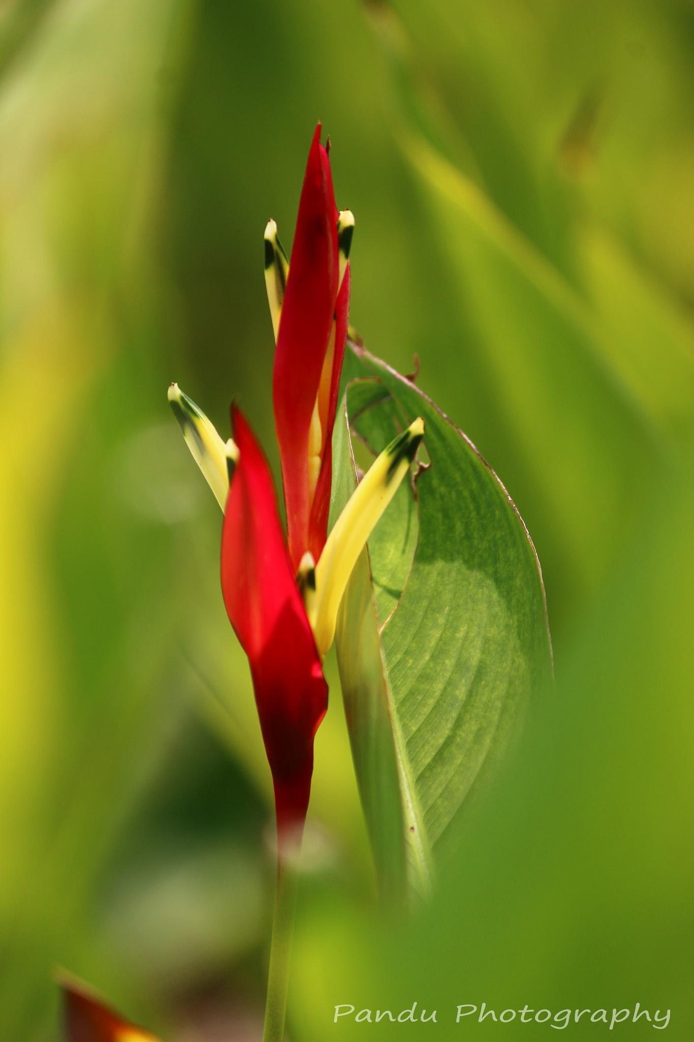 Flower  by Naveenkumar Pandu