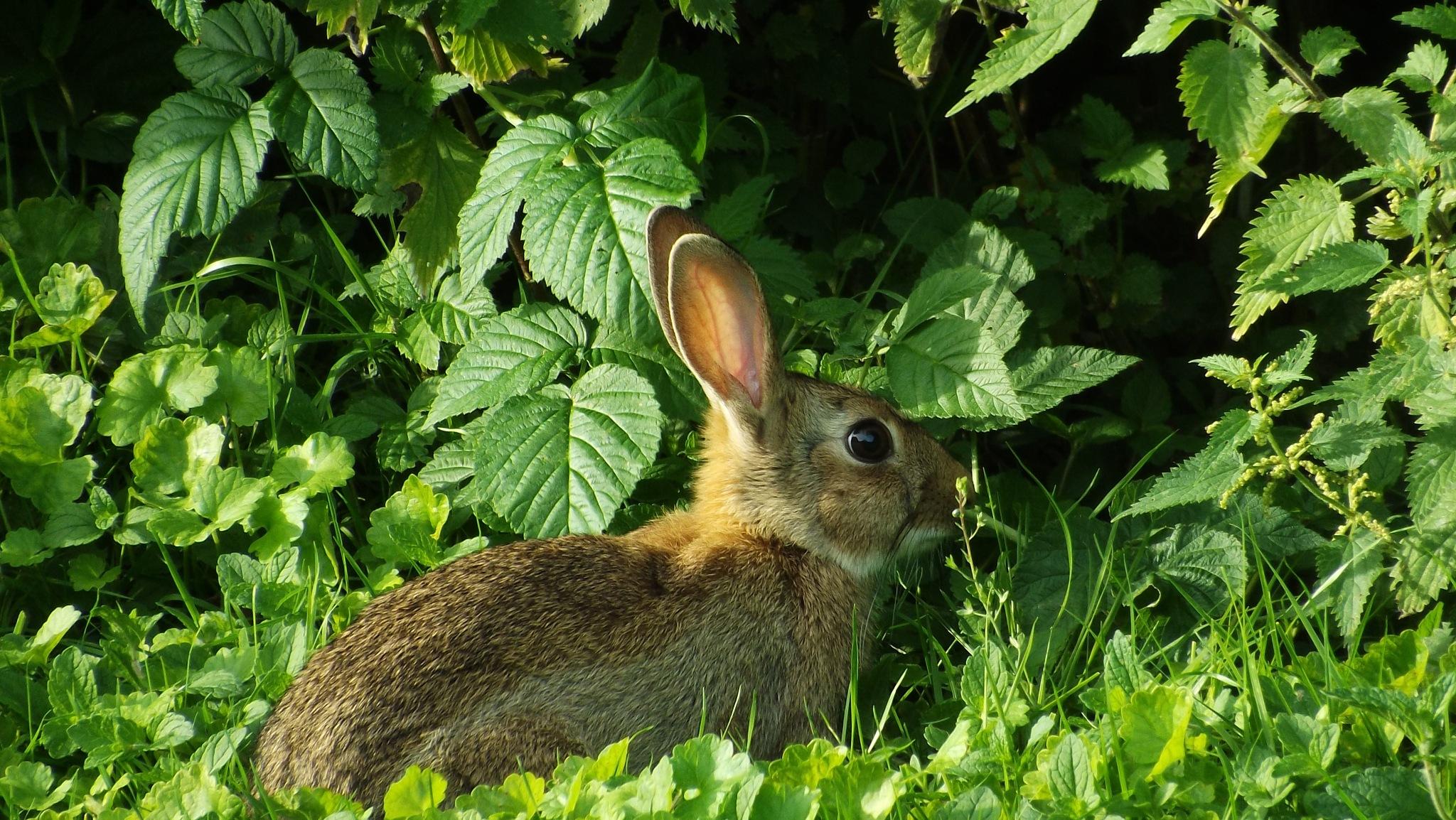Peter Rabbit!  by beachbaby58