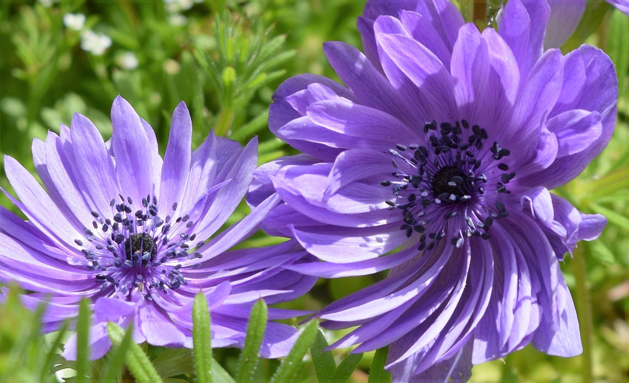 Purple passion by beachbaby58