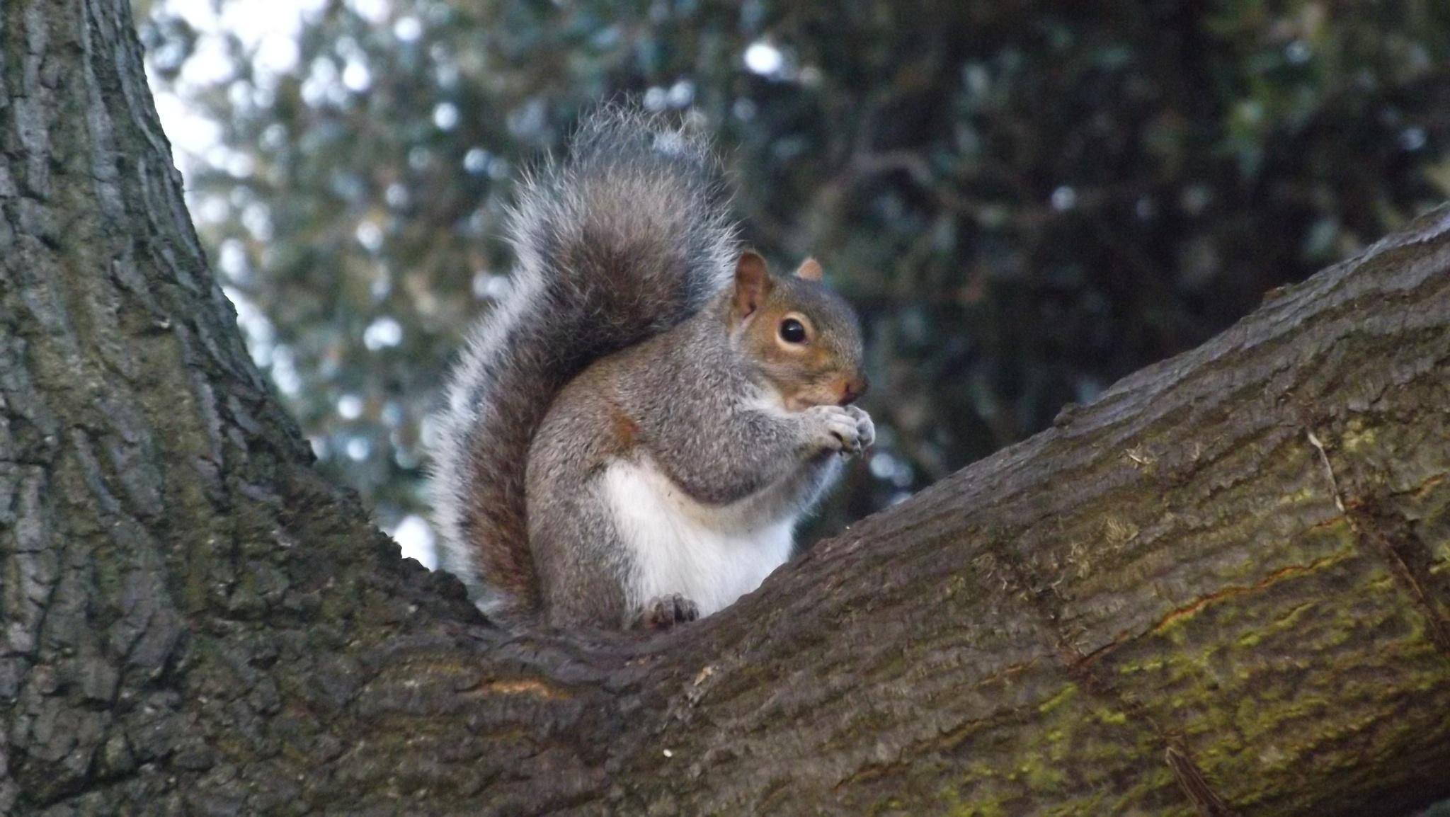 Nutty fellow by beachbaby58