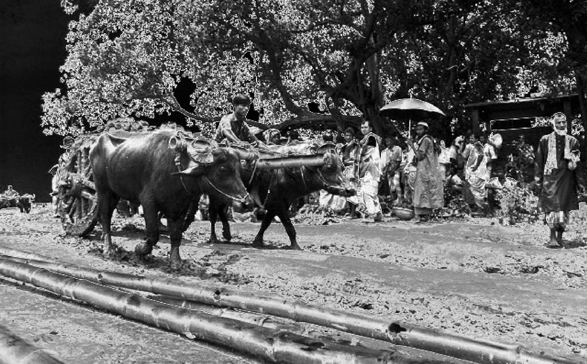 rural diary  by Babul Abdul Malek