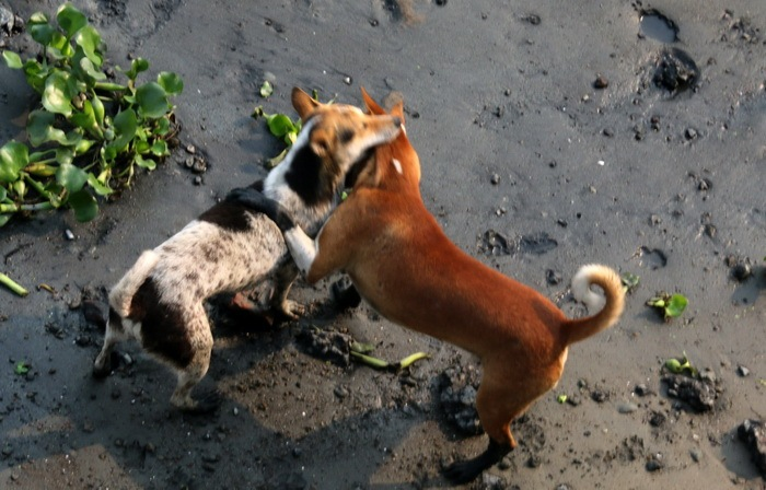 human fights for river grabbing  Dogs for dead fish ! by Babul Abdul Malek